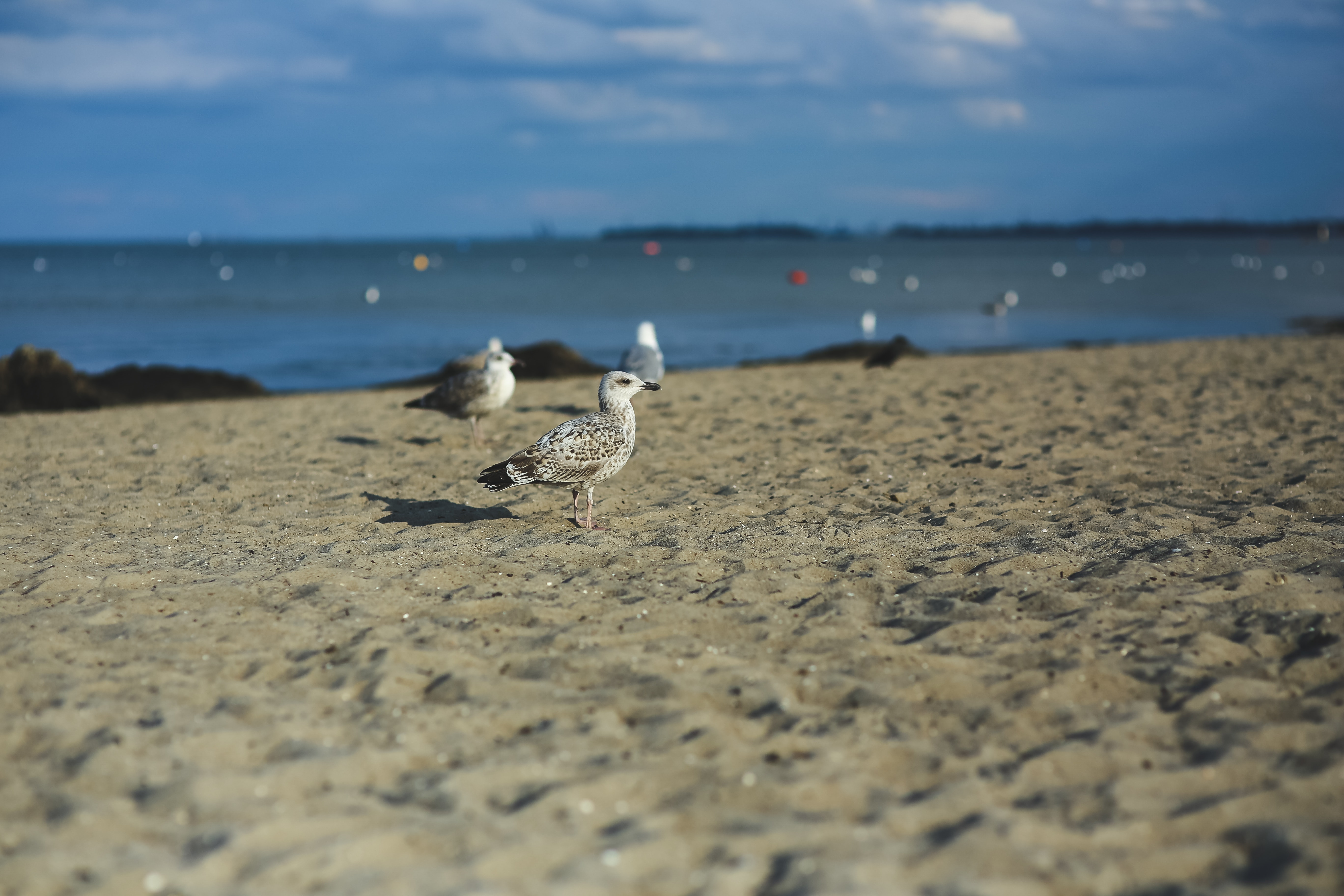 Seagull on a sandy shore photo