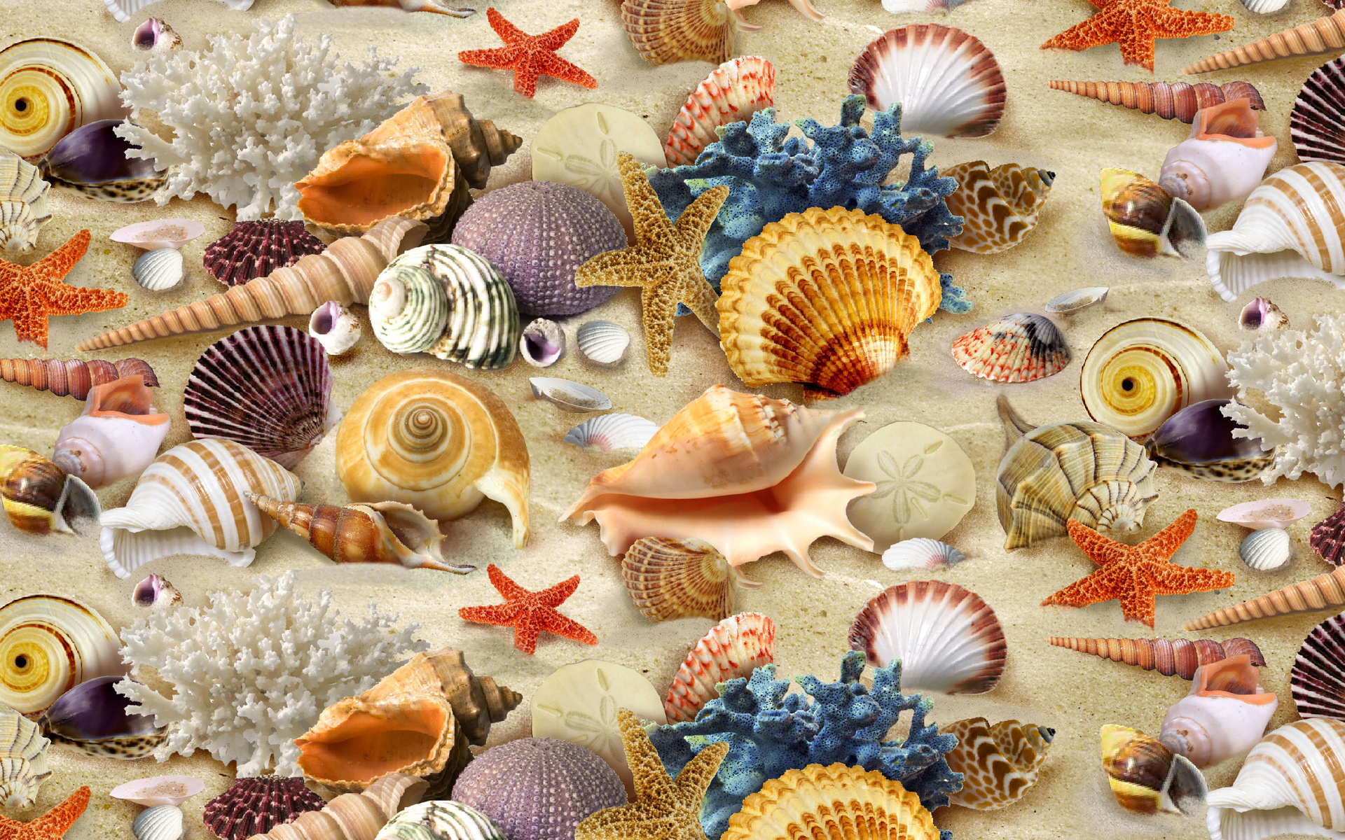 Seashell, coral, starfish, sand wallpaper - HD wallpaper download ...