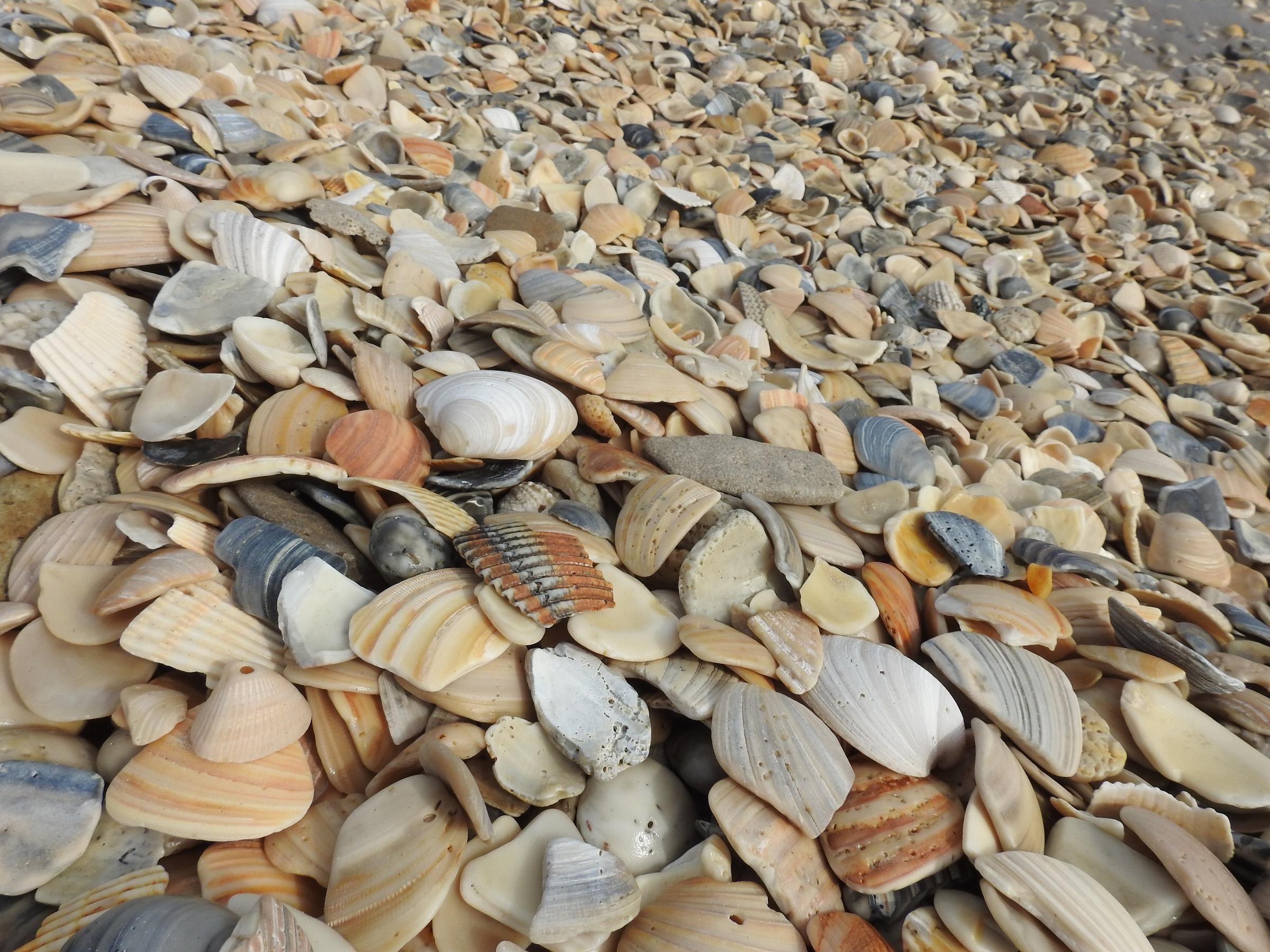 Seashells on the shore photo