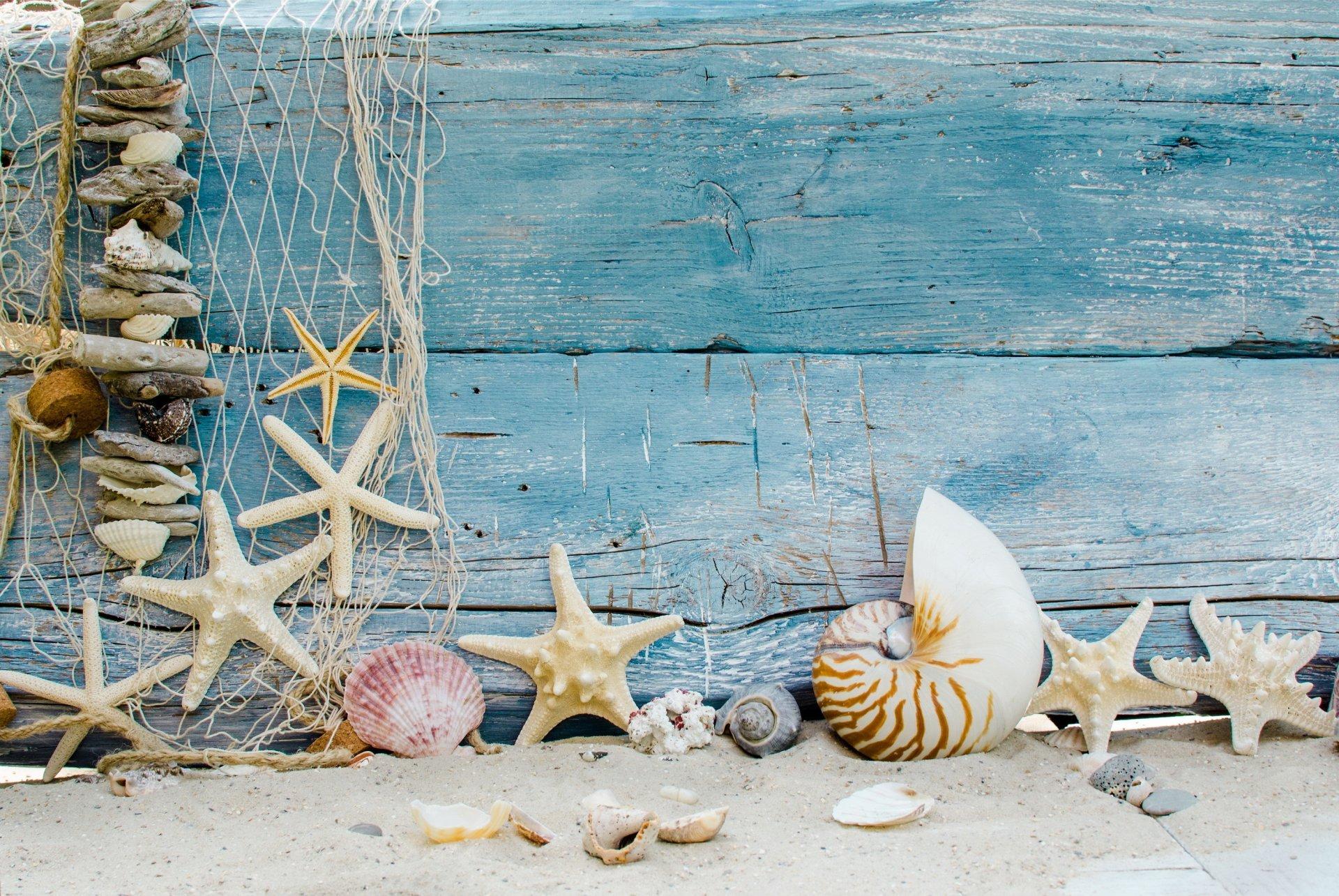 Seashells on wood photo