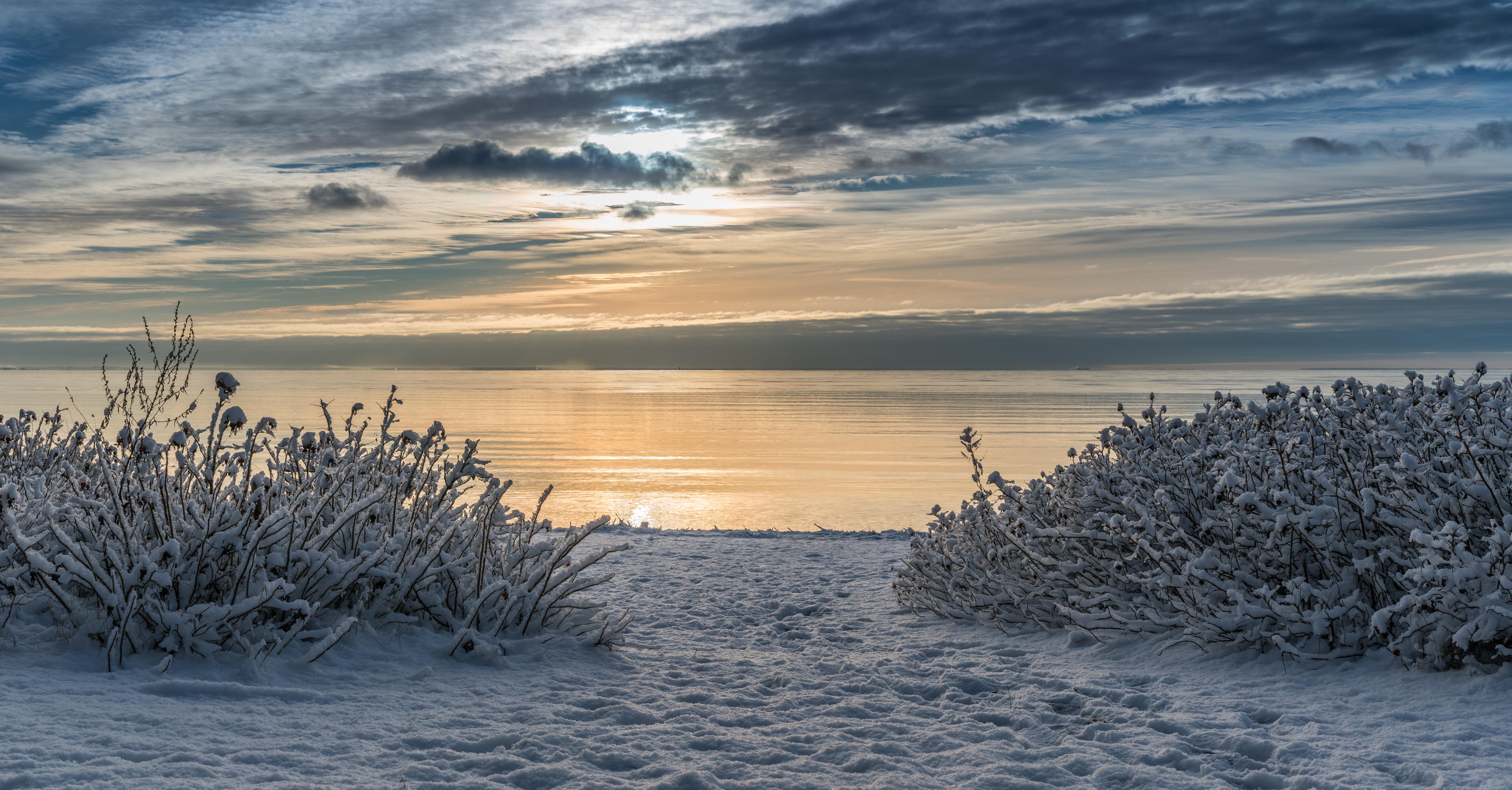 Seashore Photo, Plants, Winter, Weather, Water, HQ Photo