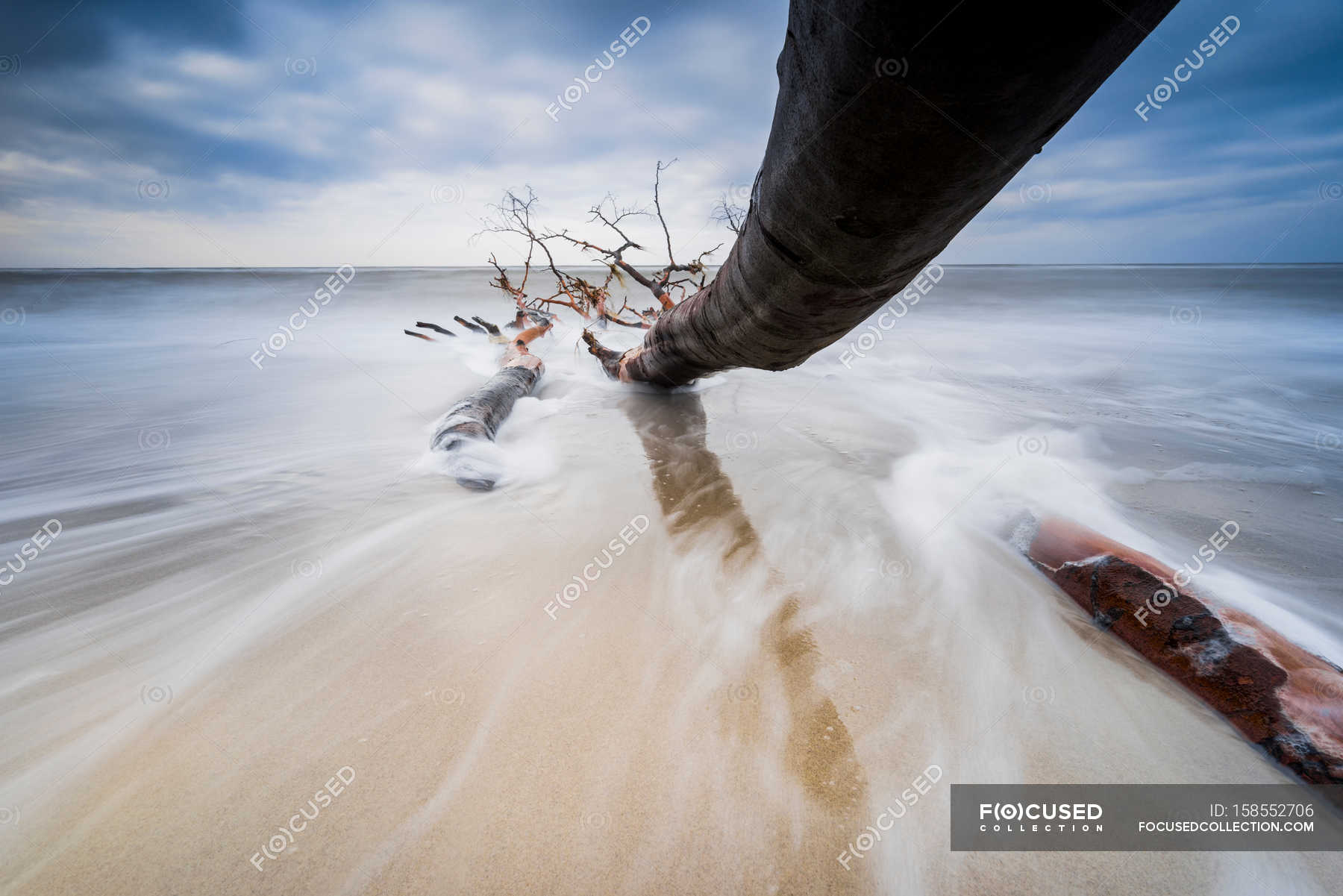 Tree trunk on sandy seashore — Stock Photo | #158552706