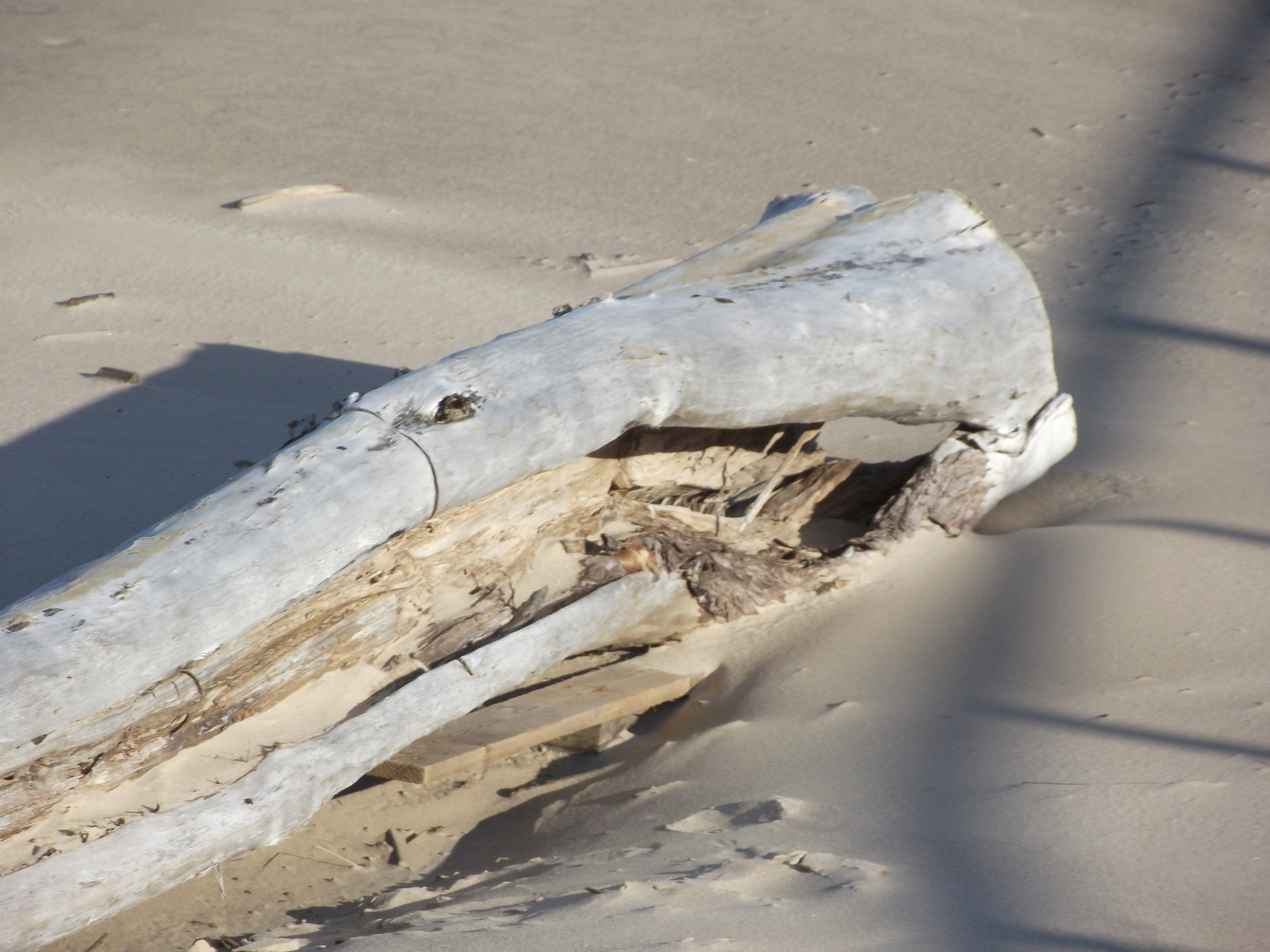 Seashore tree trunk, 2012, Shore, Washed, Wallpaper, HQ Photo