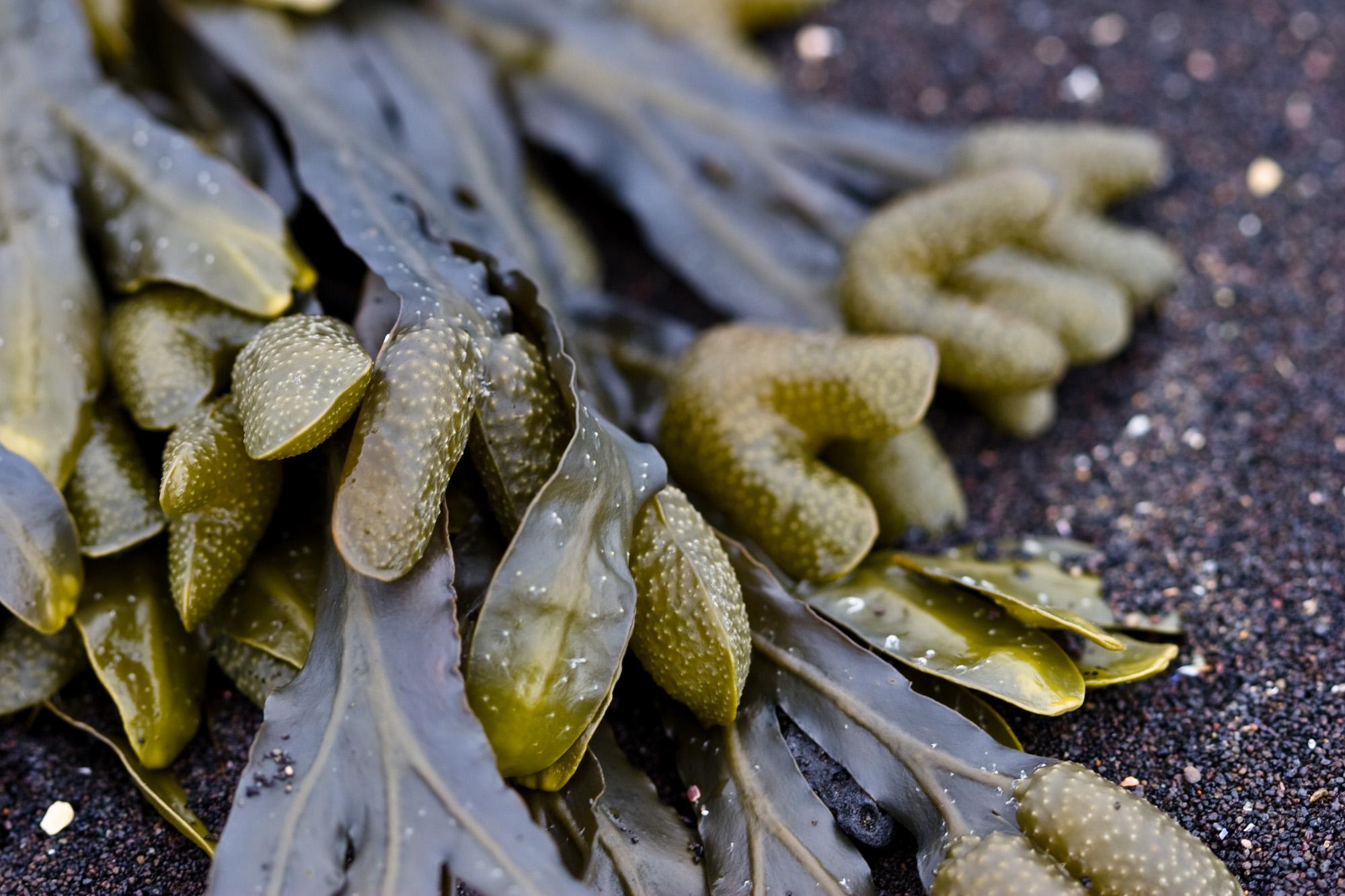 Seaweed, Slimy, Underwater, Water, Wet, HQ Photo