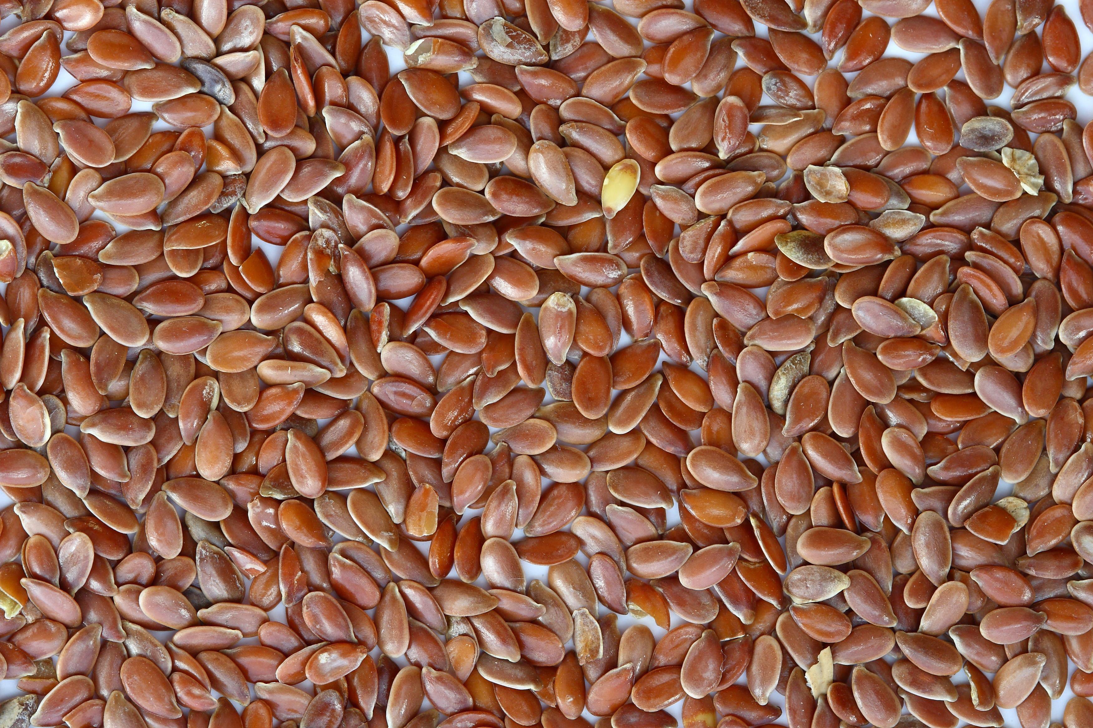 Seeds photo