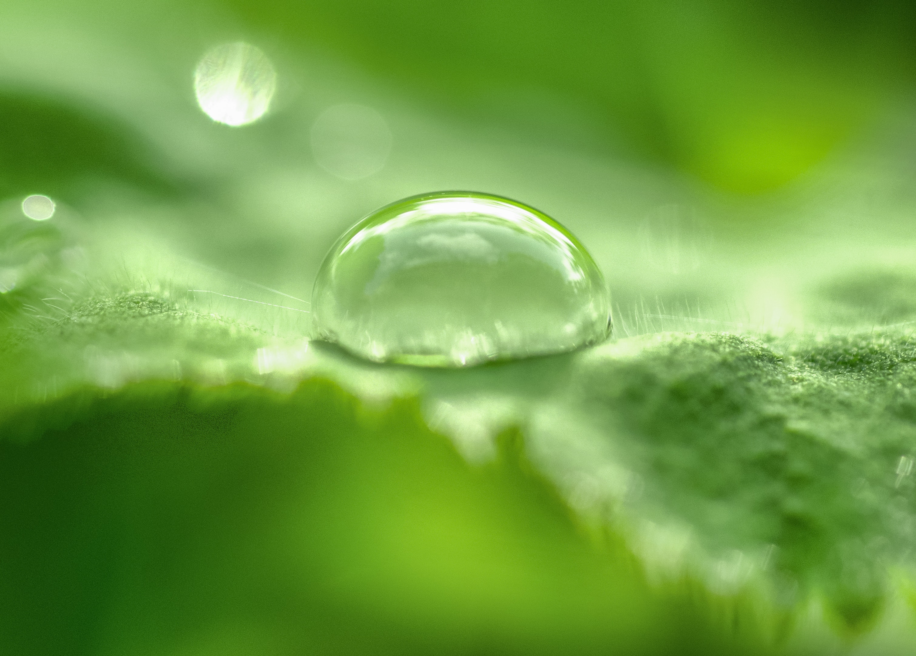 Free Photo Selective Focus Of Tear Drop Liquid Leaf H2o Use In Macro Photography For Dummies Hq
