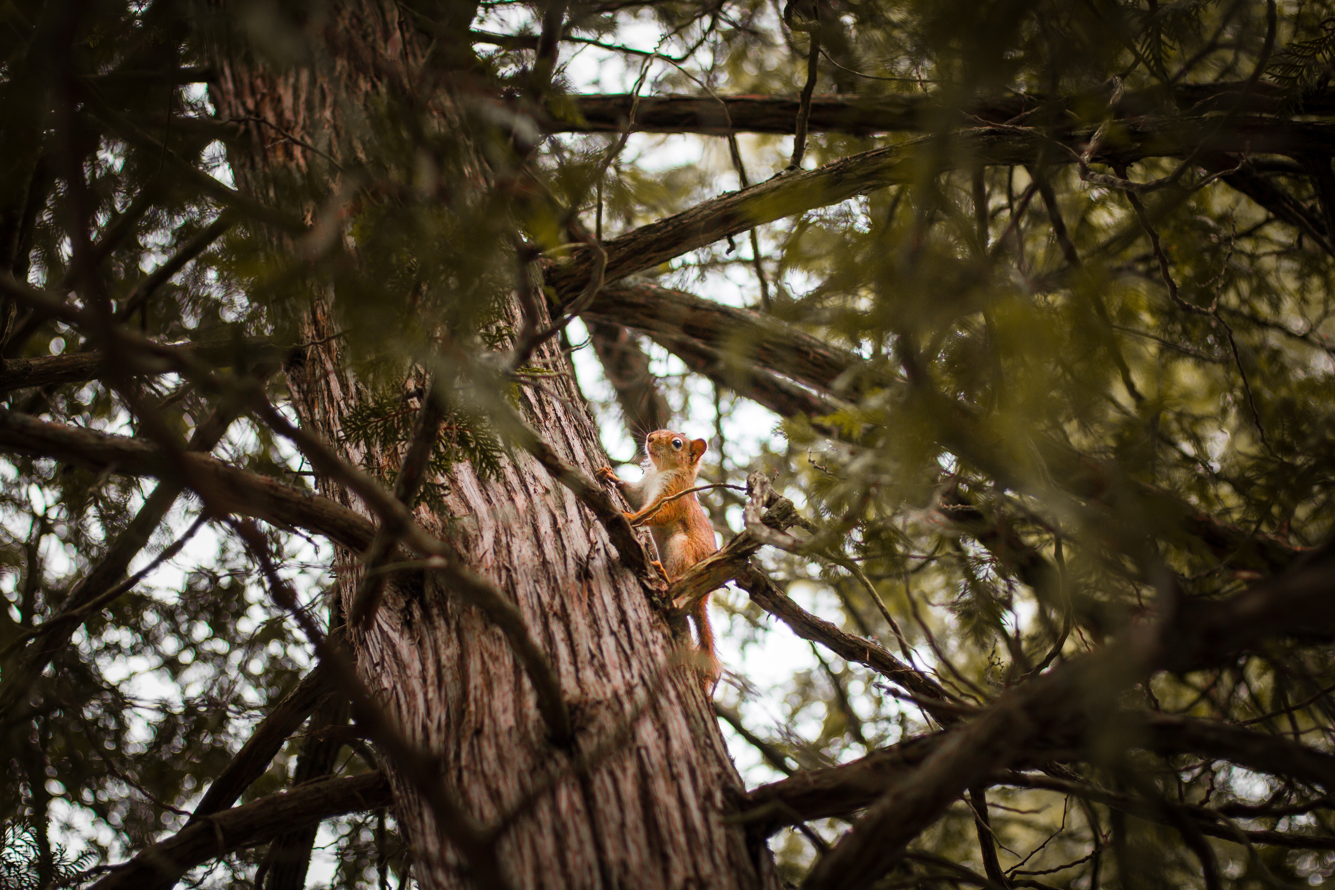 Selective Focus Photograph of Squirrel on Trunk, Animal, Branches, Close-up, Daytime, HQ Photo
