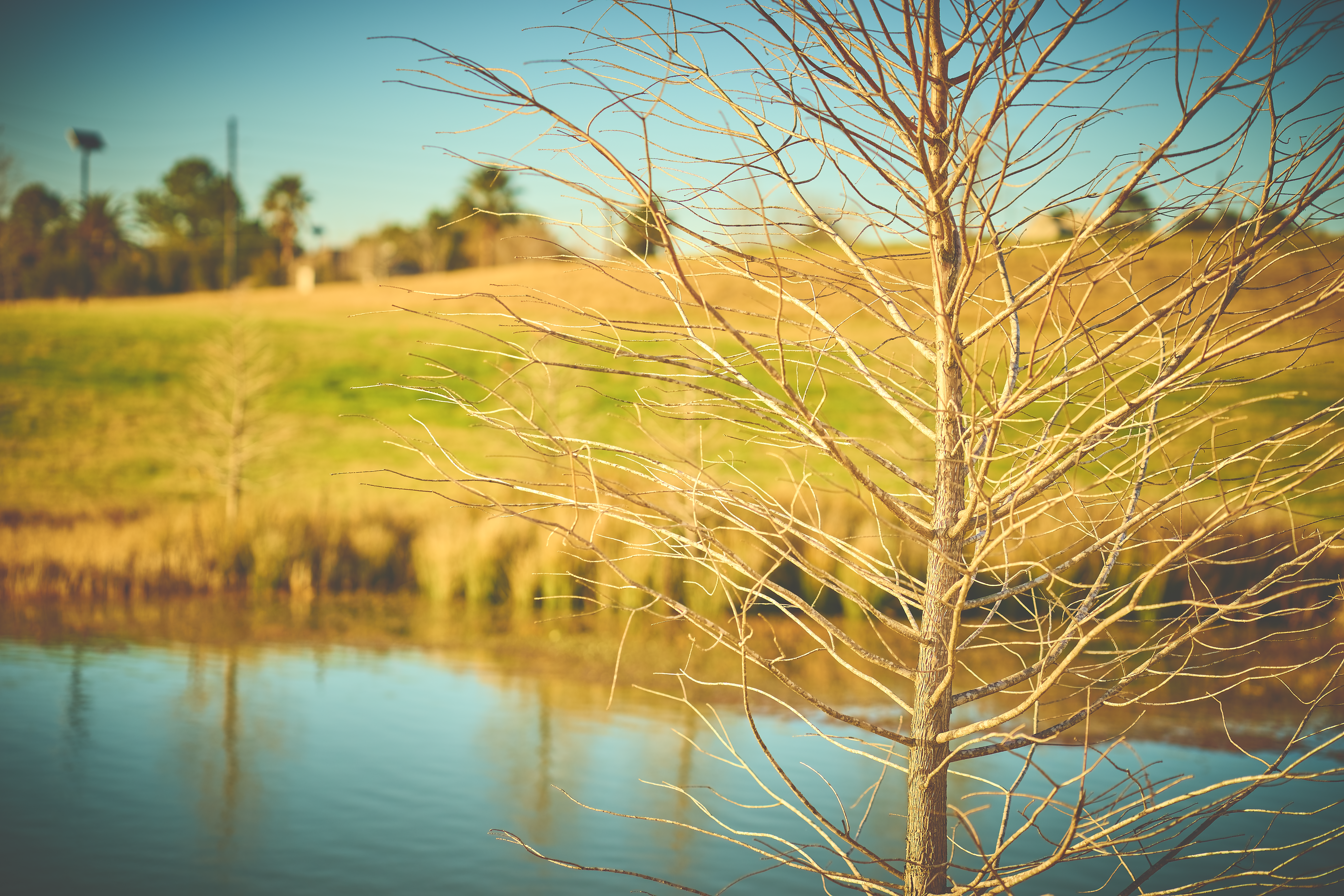 Selective focus photography of bare tree with body of water background