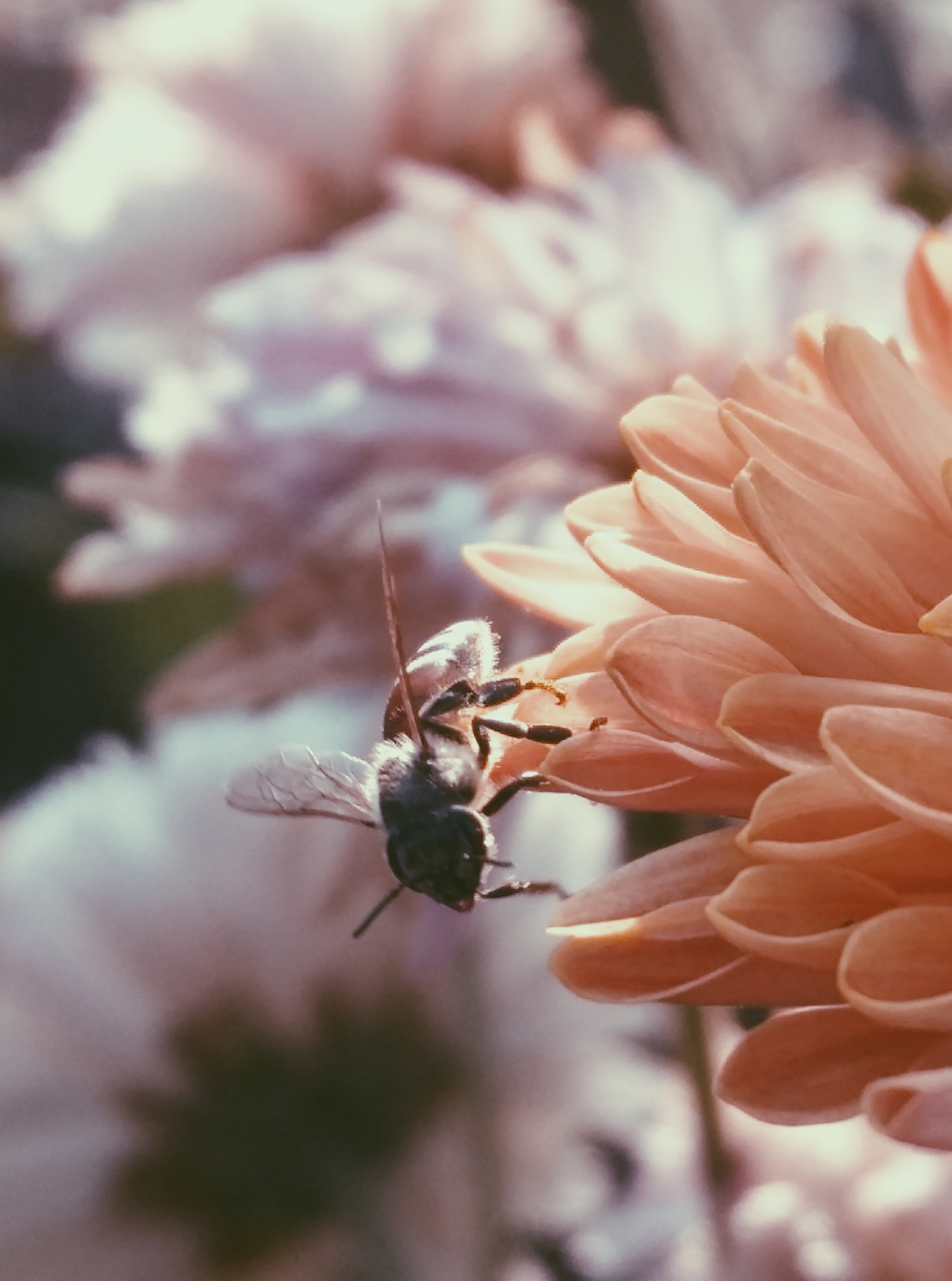 Selective Focus Photography of Bee on Flower, Animal, Flower, Pollination, Pollen, HQ Photo