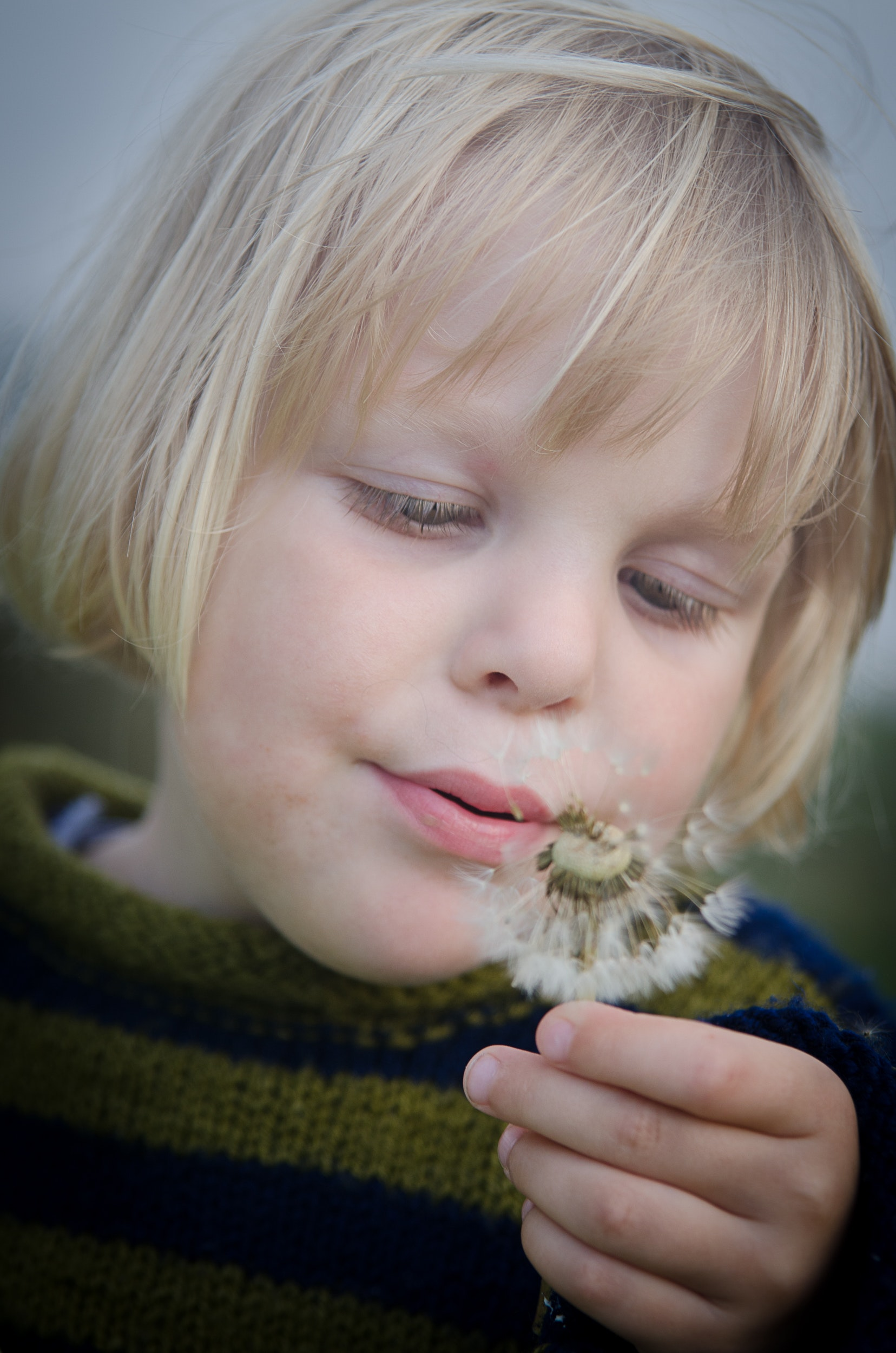 Selective Focus Photography of Girl in Green and Black Striped Sweater Holding and Blowing Dandelion, Adorable, Hand, Toddler, Summer, HQ Photo