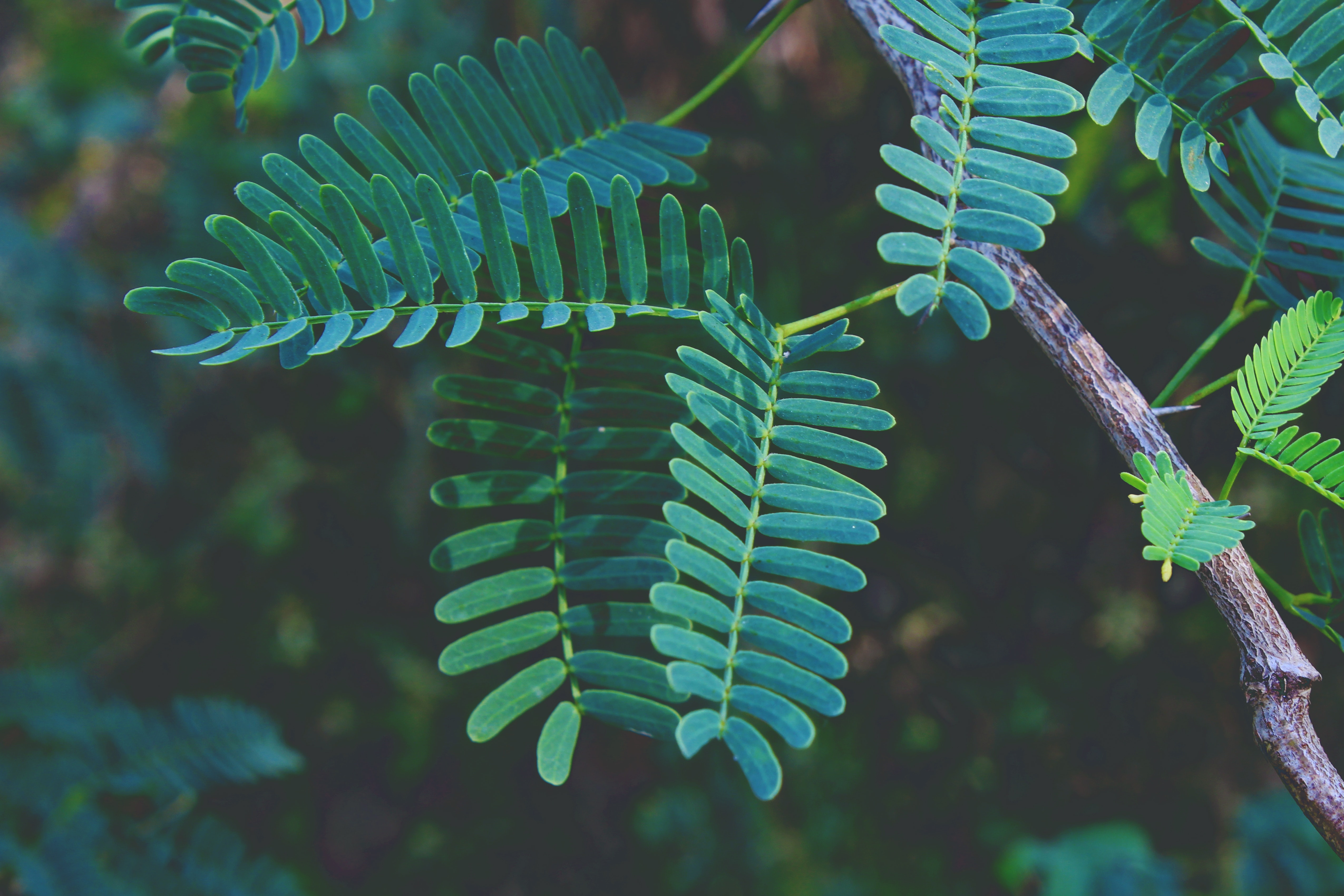 Selective focus photography of green fern plant