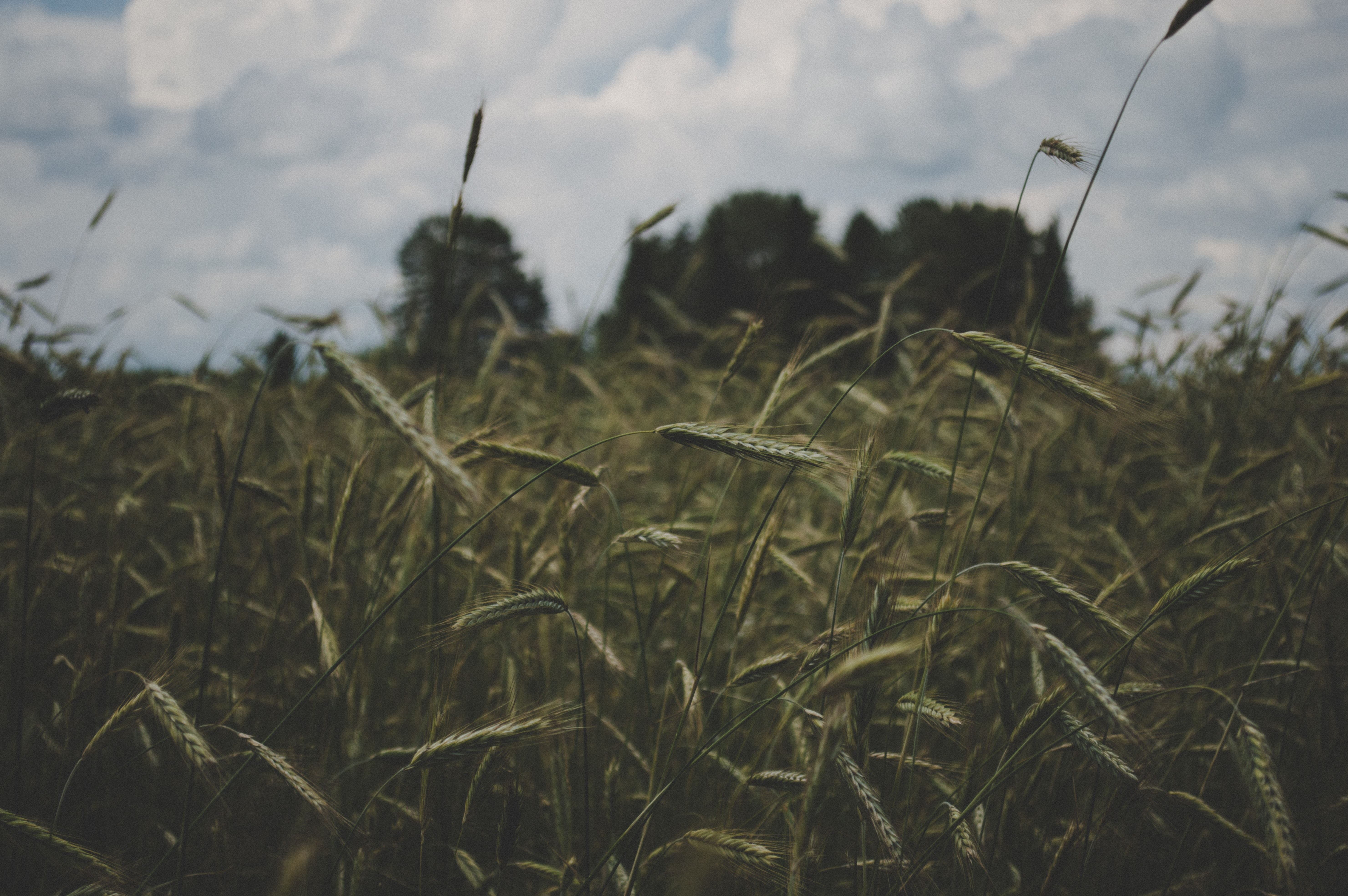 Selective focus photography of green grass under white sky