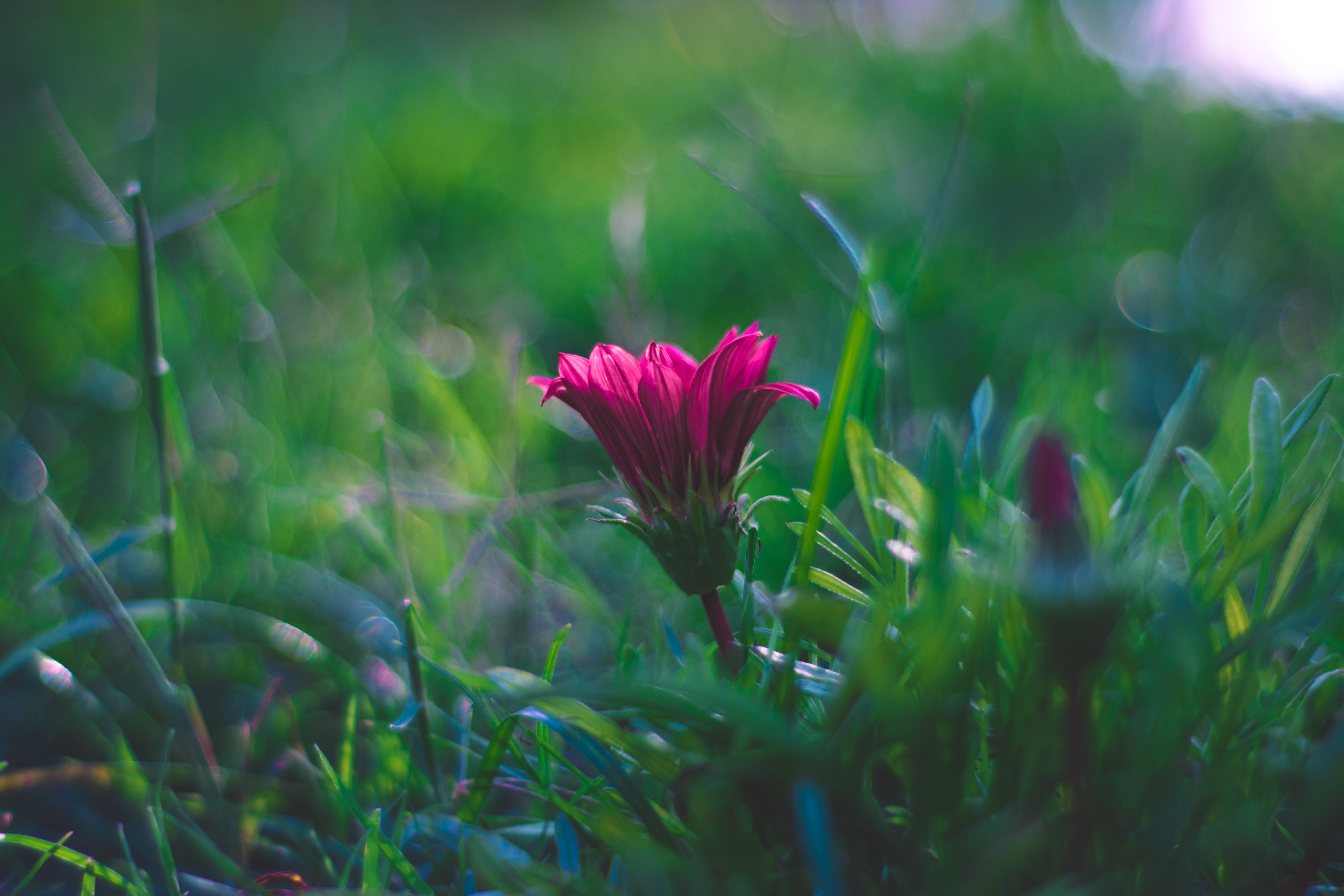 Free Photo Selective Focus Photography Of Pink Flower Growth
