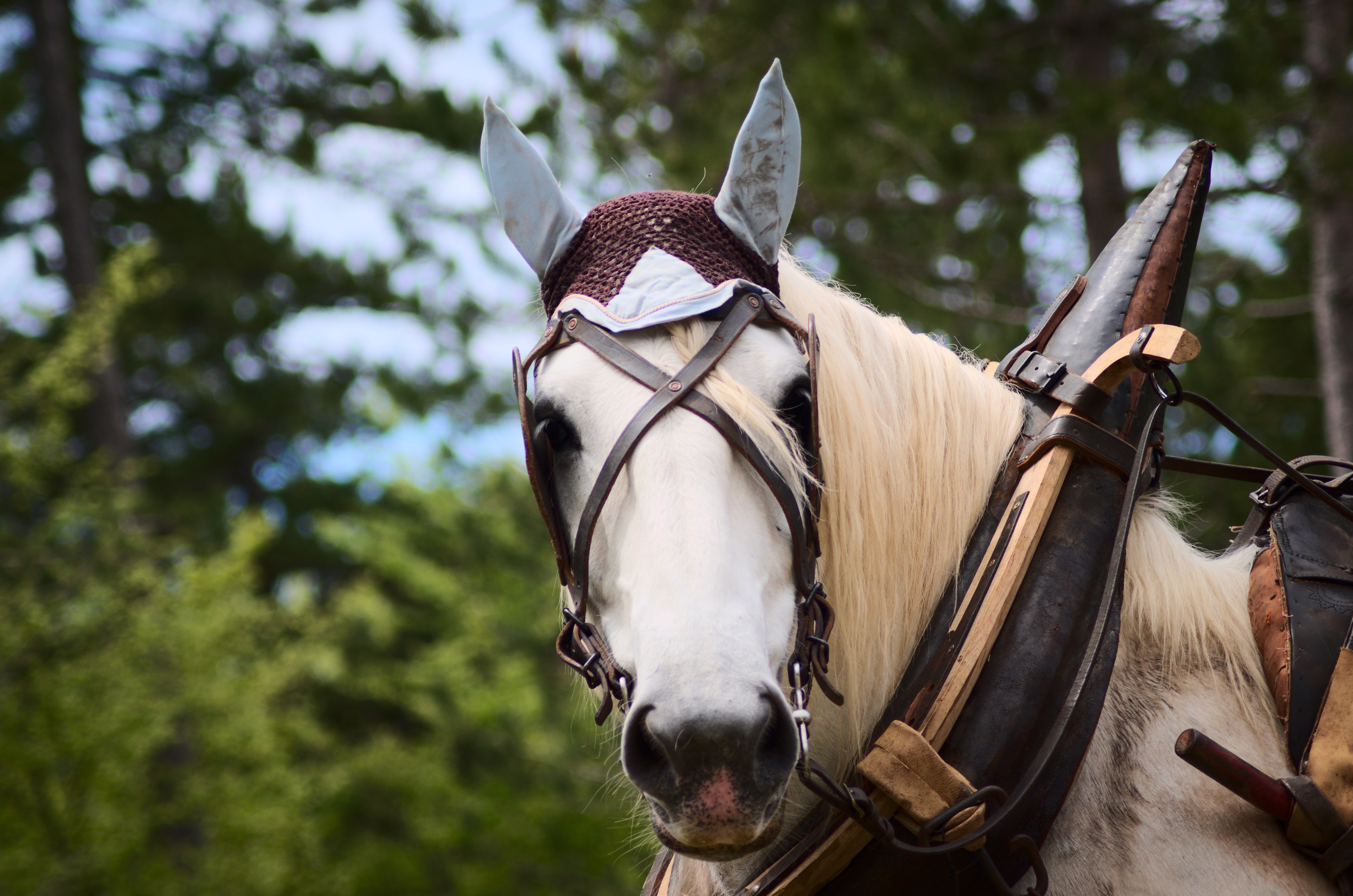 Selective Focus Photography of White Horse, Animal, Animal photography, Cavalry, Cheval, HQ Photo