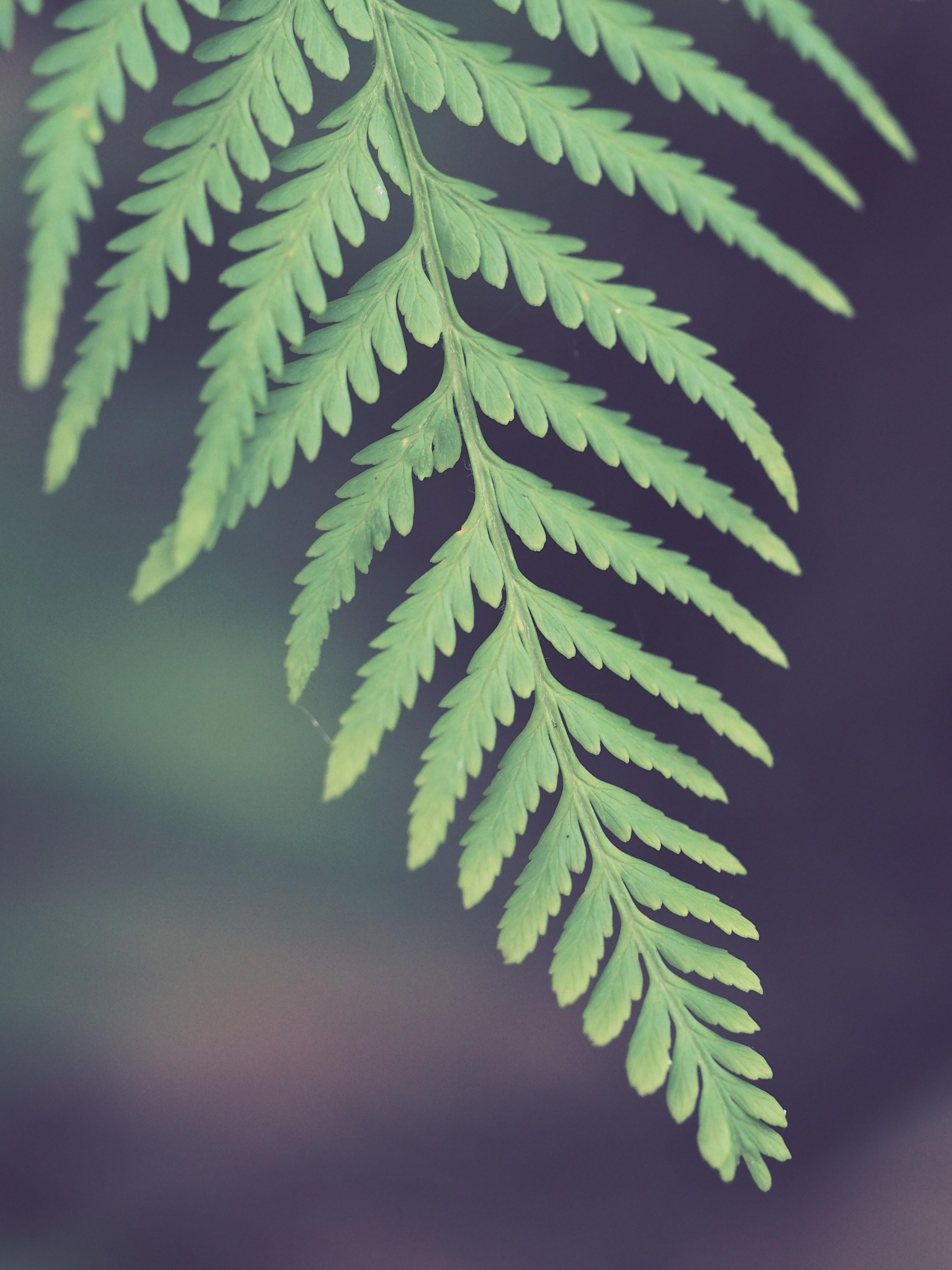 Selective photo of green leaf fern