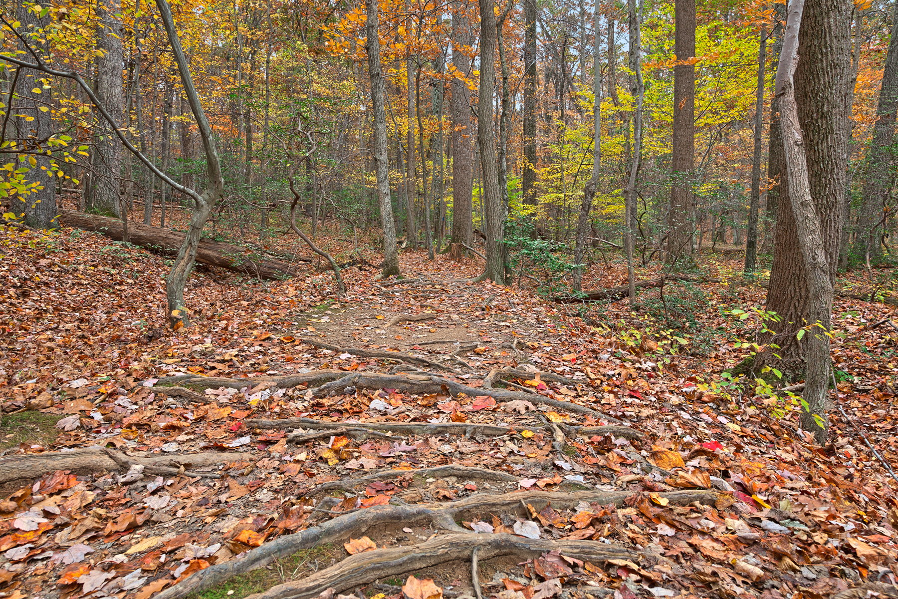 Seneca fall forest trail - hdr photo
