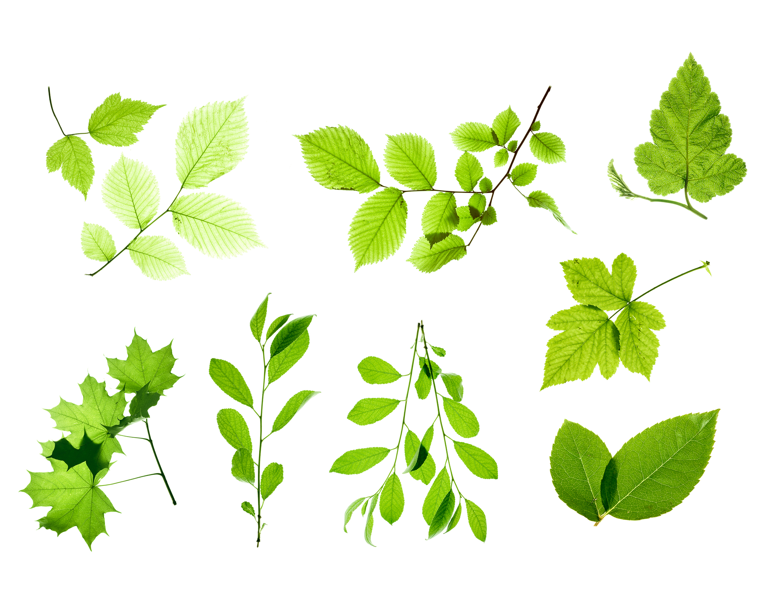 Set of Isolated Leaves, Plant, Ornate, Object, Nature, HQ Photo