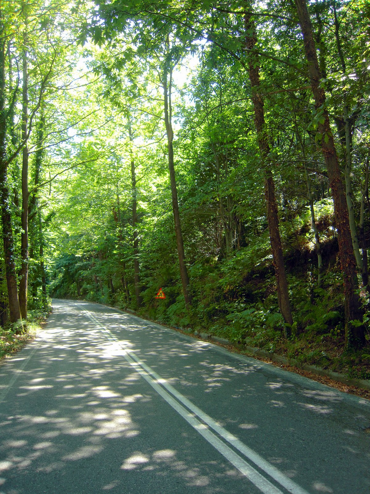 the shadowy road between Tsagarada and Mouresi villages ... east ...