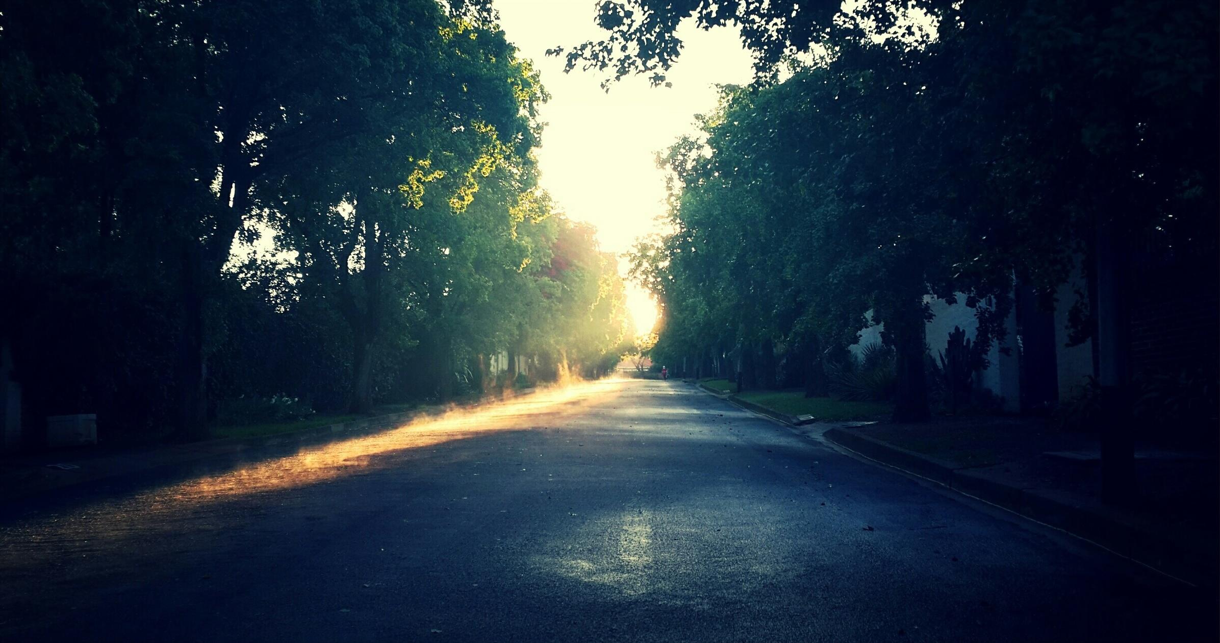 Shadowy Road, Tree, Wood, Woods, Shadow, HQ Photo