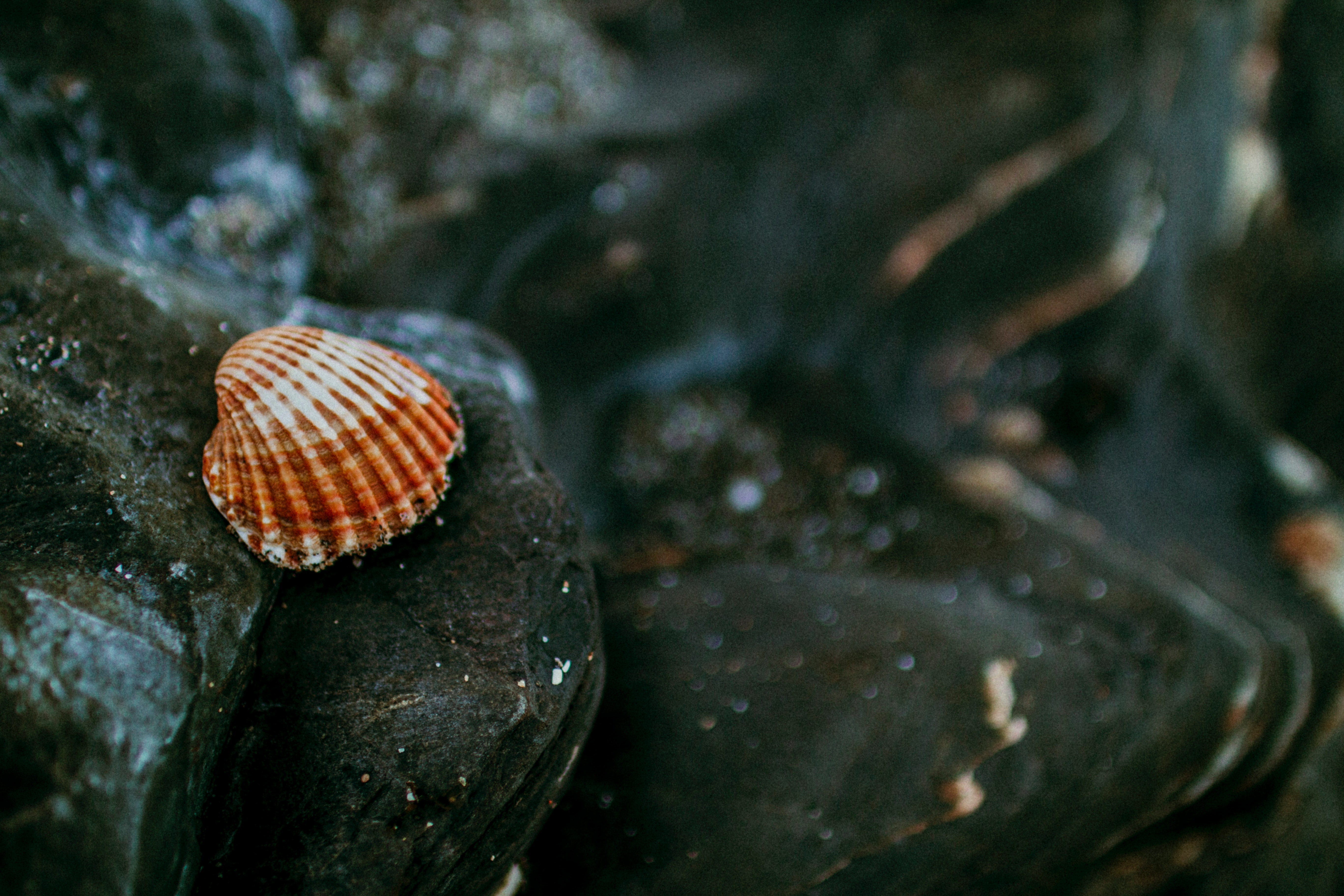Shallow focus of white and brown shell photo