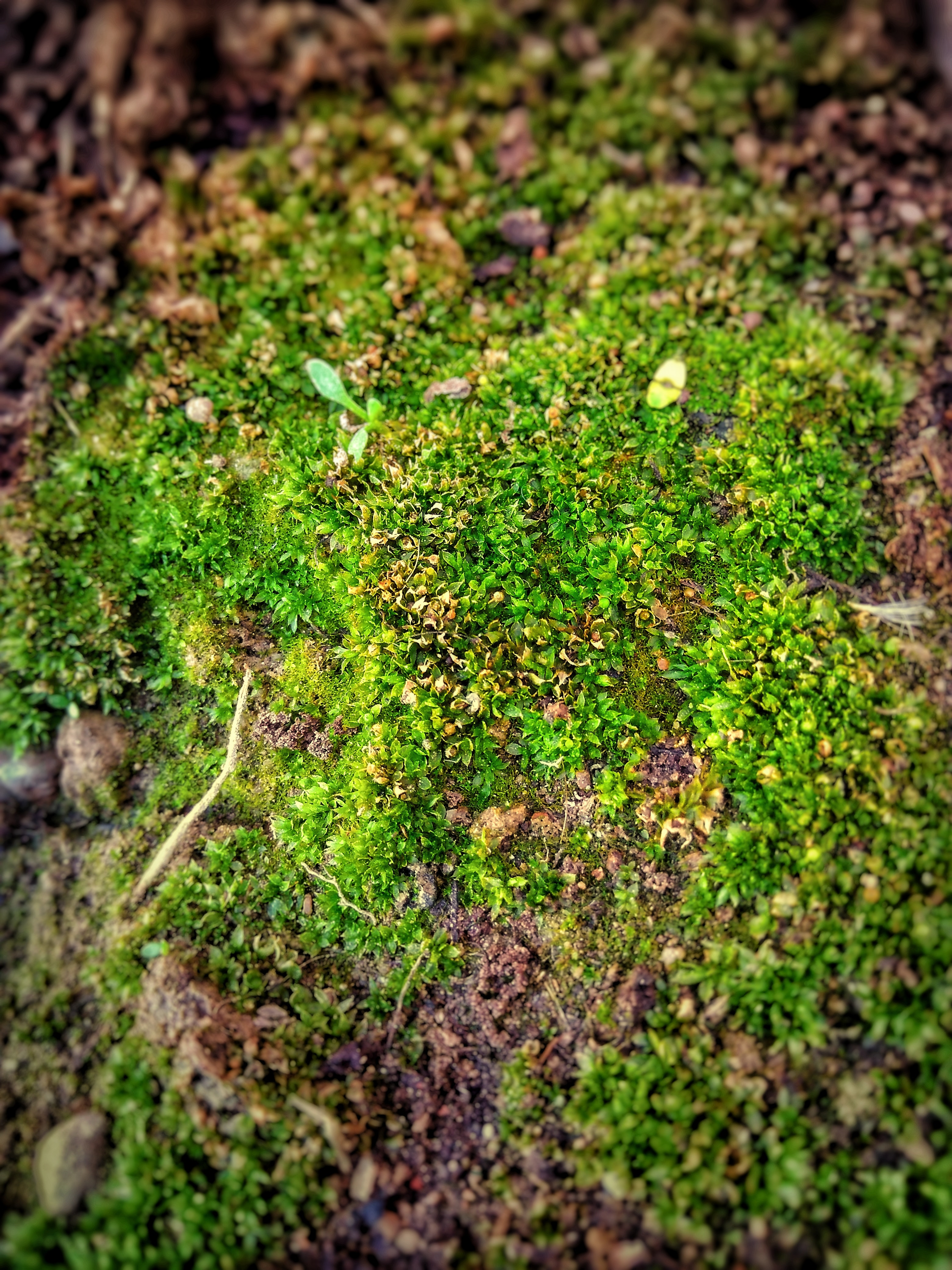 Shallow Focus Photo of Green Moss, Close-up, Moss, Texture, Summer, HQ Photo