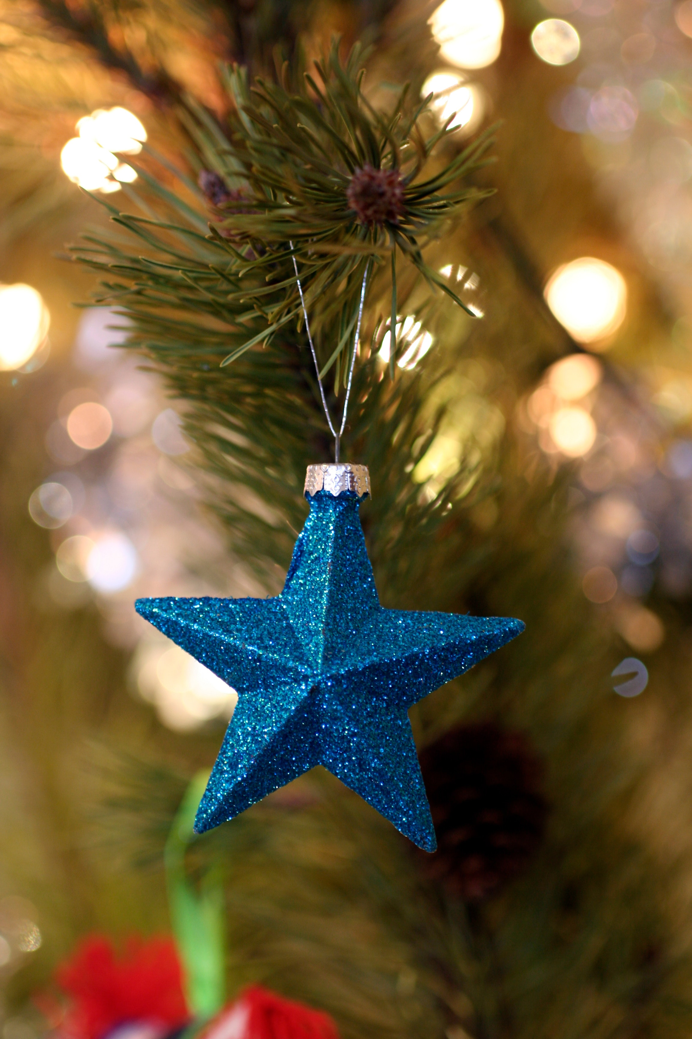 Shallow Focus Photography of Blue Star Christmas Tree Decor, Gold, Tree, Star, Shining, HQ Photo