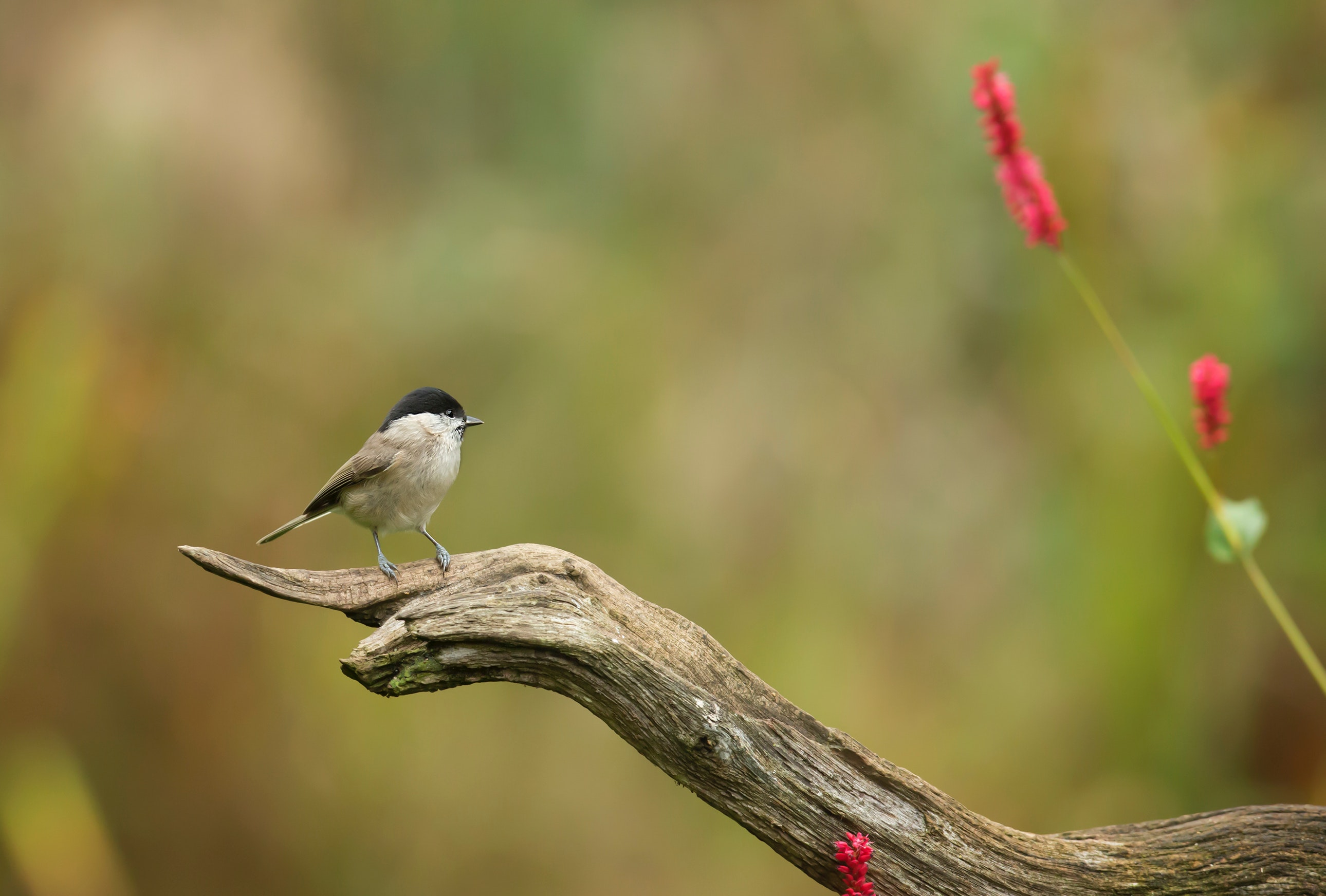 Shallow Focus Photography of Gray Bird on Brown Branch, Outdoors, Wood, Wings, Wildlife, HQ Photo