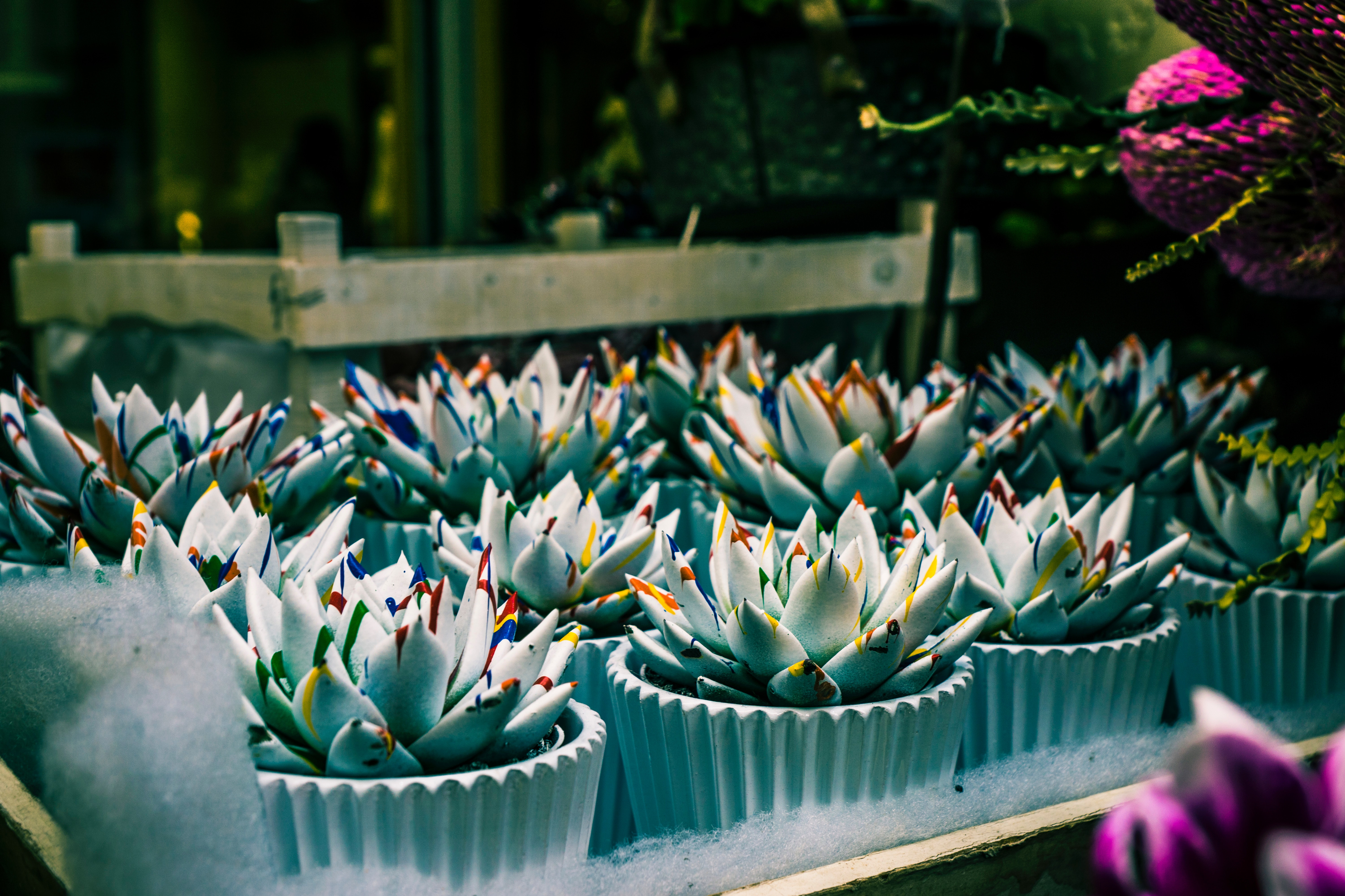 Shallow Focus Photography of Green Succulent Plants, Blooming, Flowerpots, Plants, Outdoors, HQ Photo