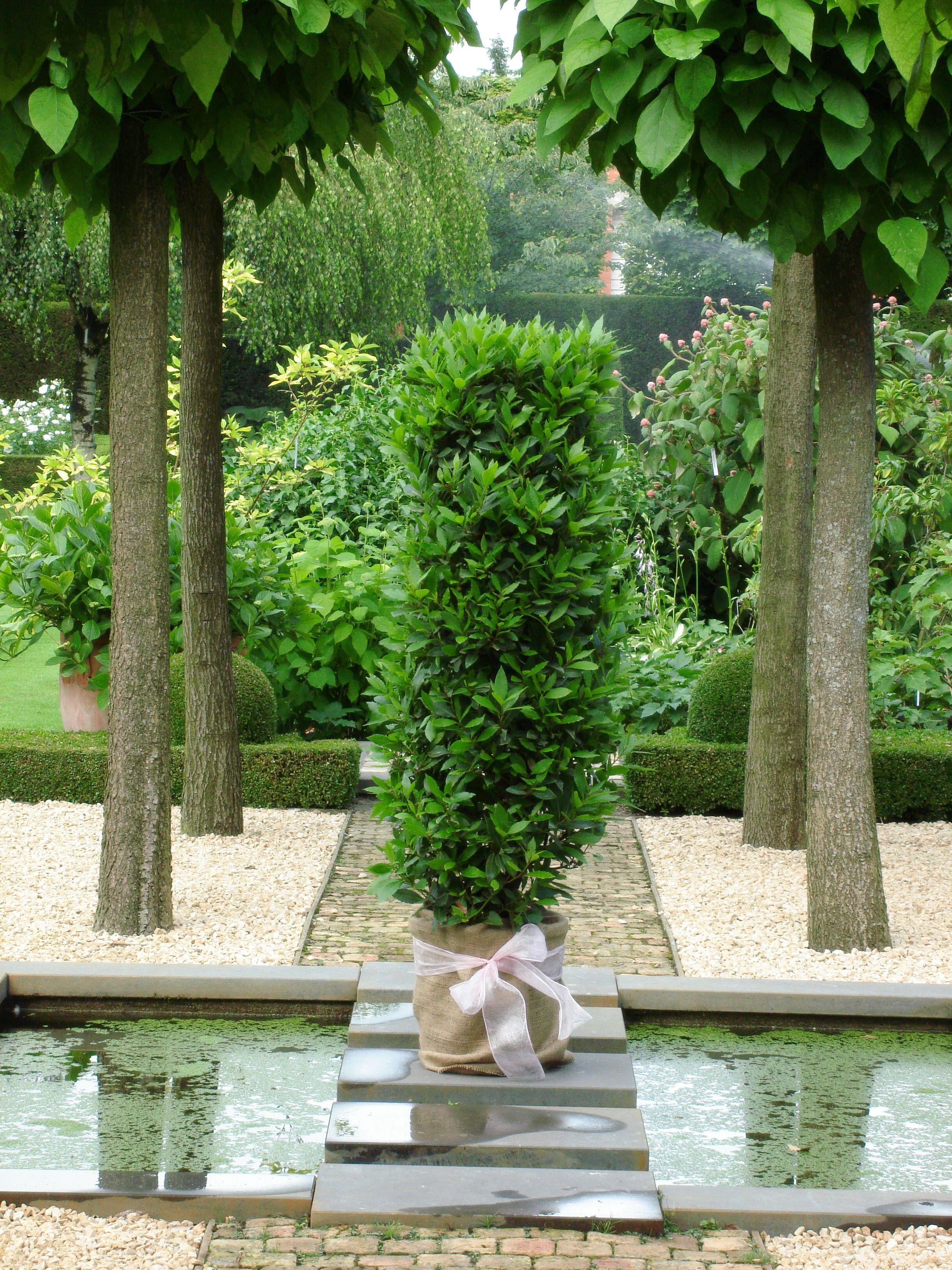 Resultado de imagen de stylish gardens | ideas jardin | Pinterest ...