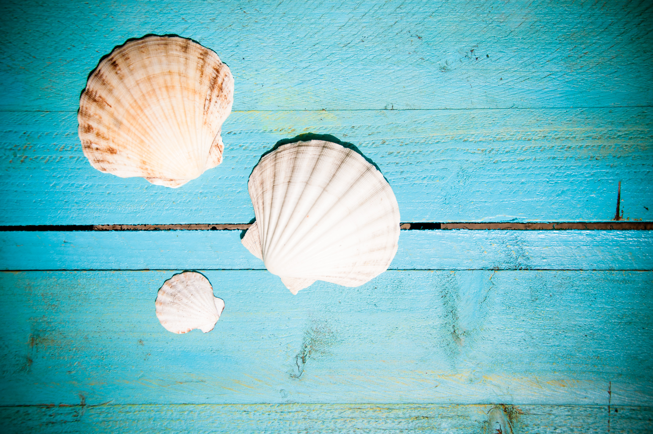 Shells on blue wooden planks photo