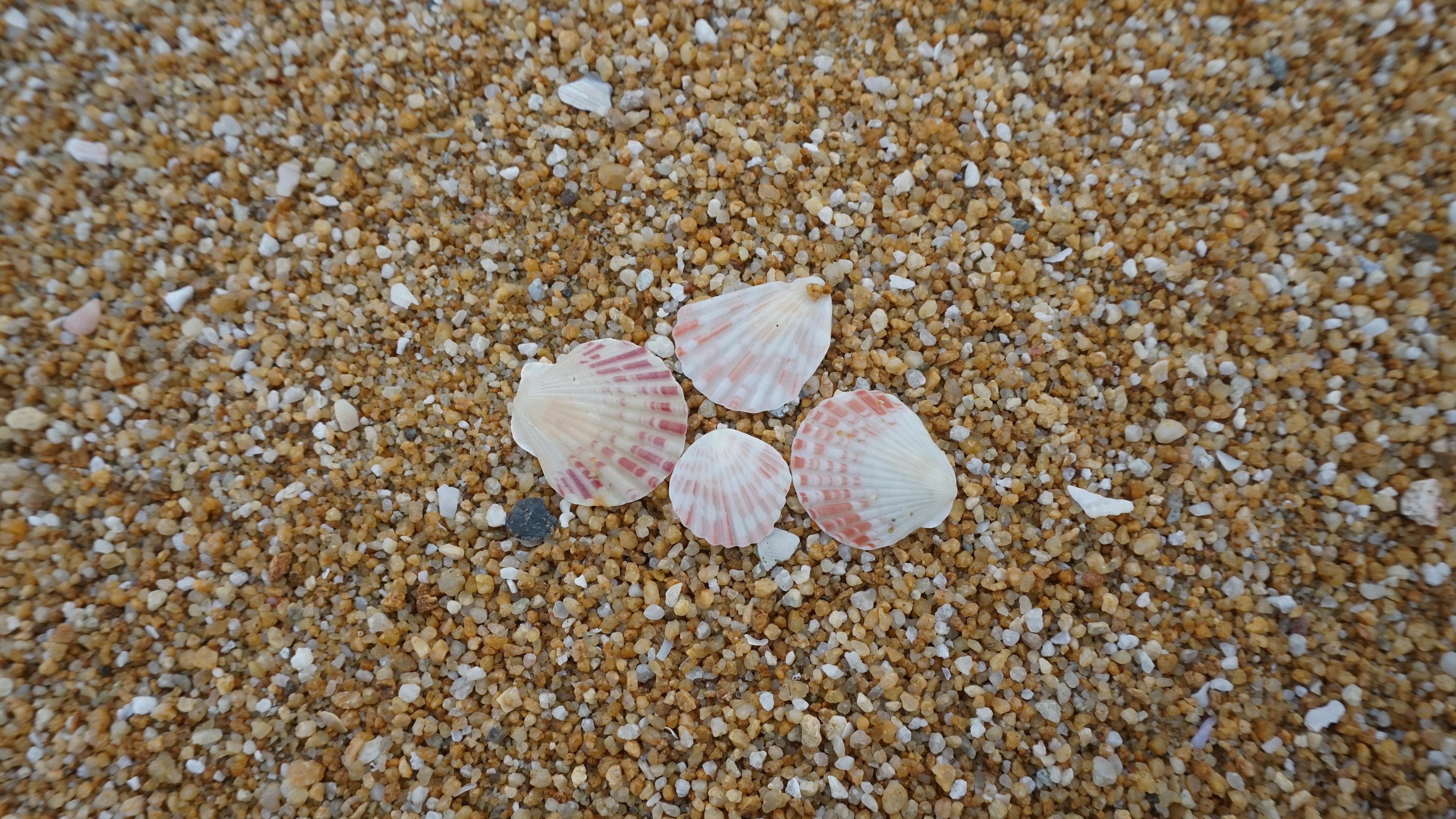 Shells on shore photo