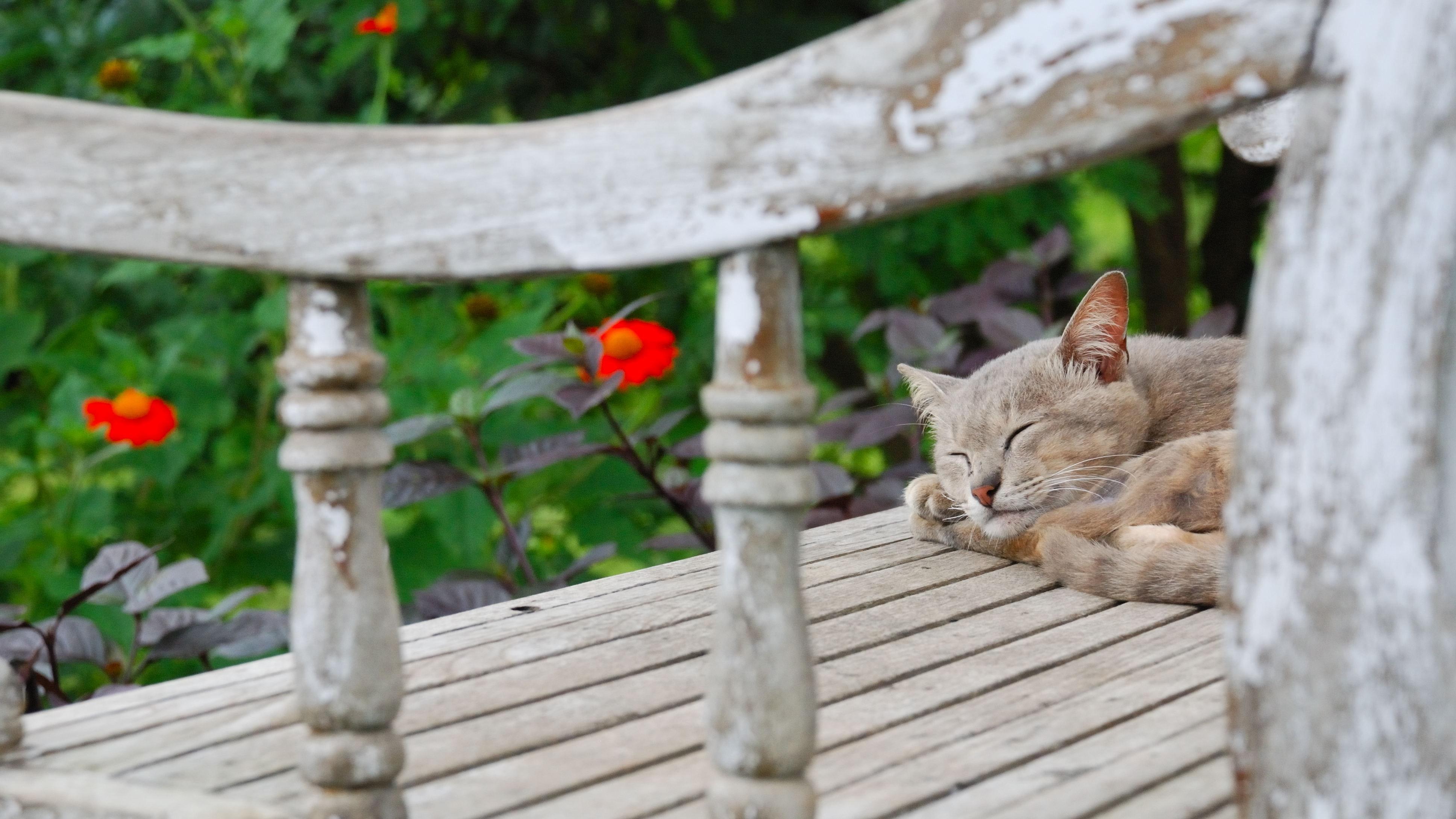 Short-fur gray cat sleeping on gray wooden surface photo