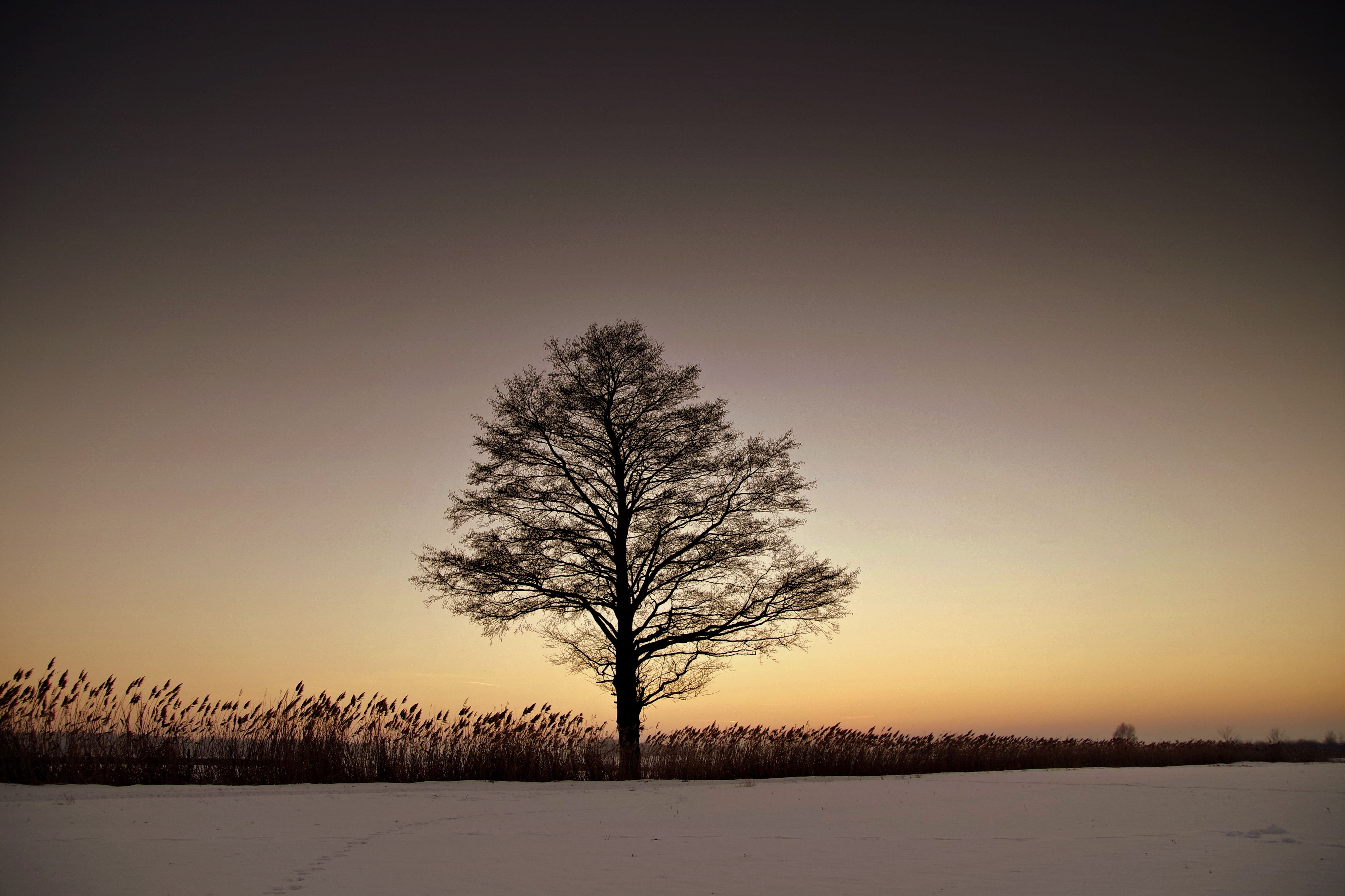 Silhouette Bare Tree on Landscape Against Sky during Sunset, Backlit, Outdoors, Twilight, Tree, HQ Photo