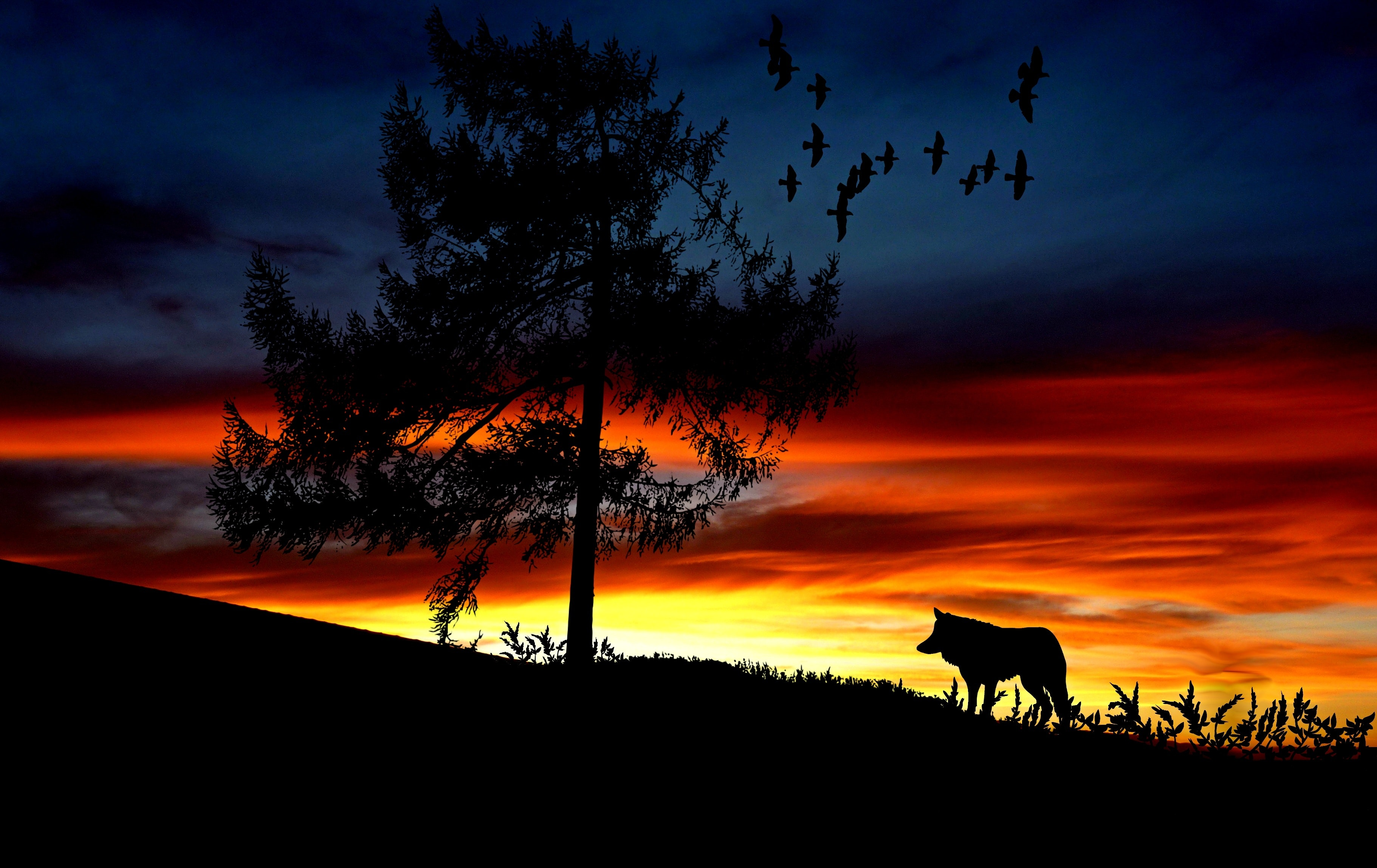 Silhouette dog on landscape against romantic sky at sunset photo
