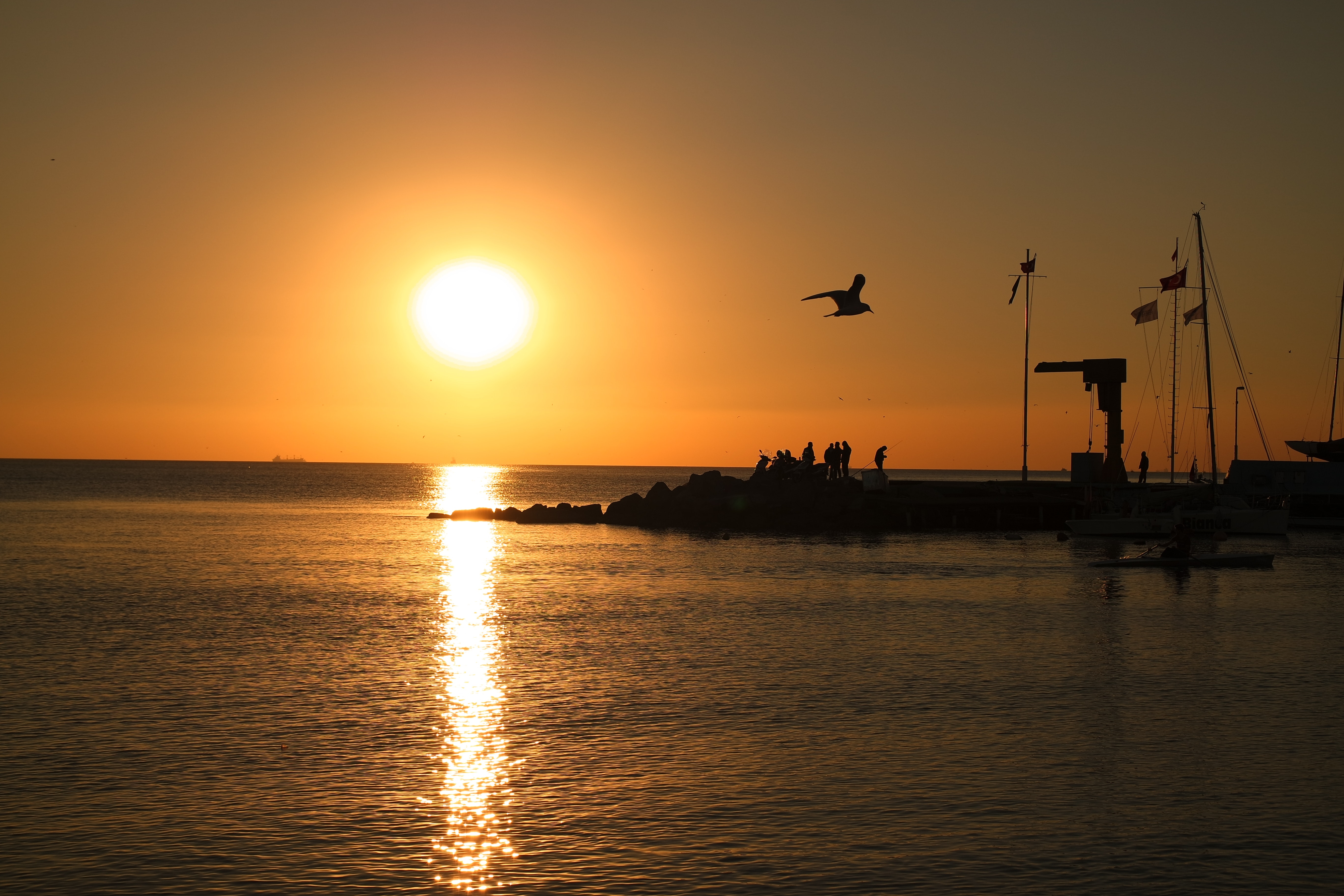Silhouette of Bird Near Body of Water during Sunset, Birds, Boats, Evening sun, Pier, HQ Photo