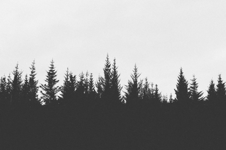 Trees and lake – free photo on | Tattoo and Arm tattoo
