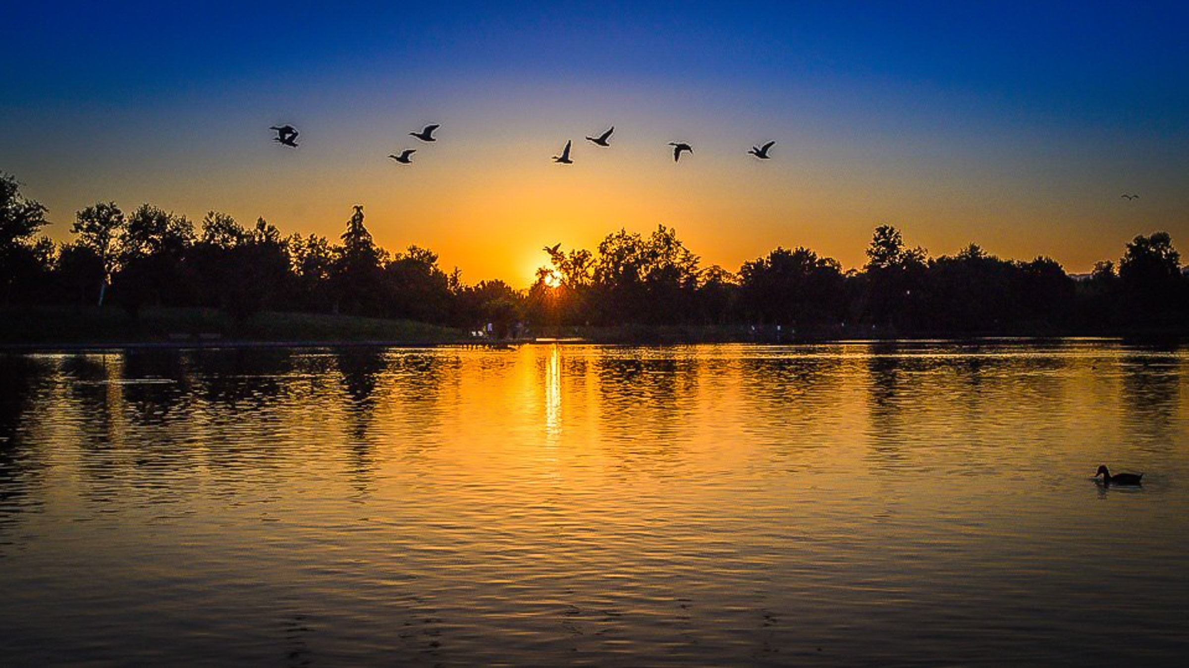 Silhouette of forest with birds flying above body of water during sunset photo