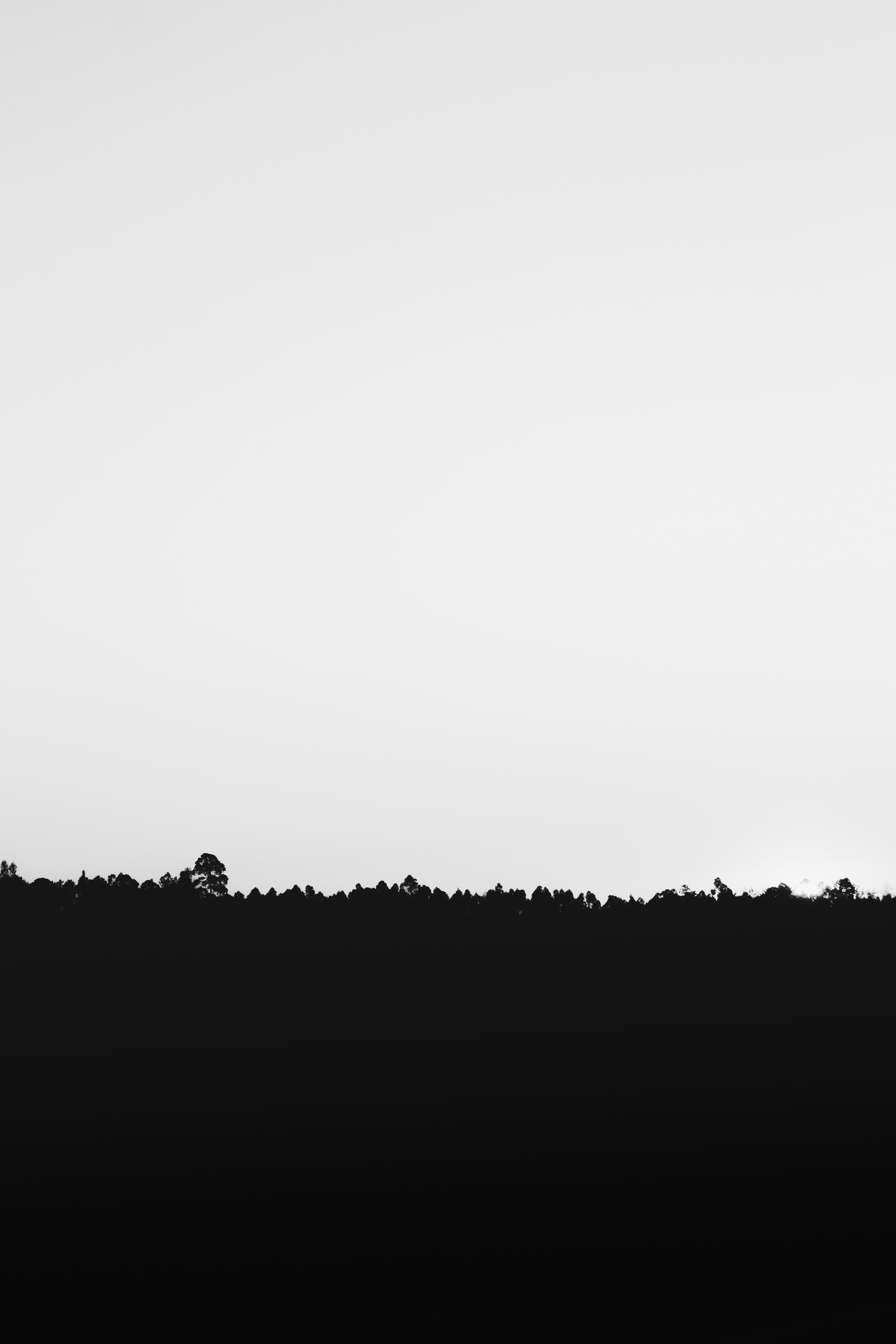 Silhouette of grass under white sky photo