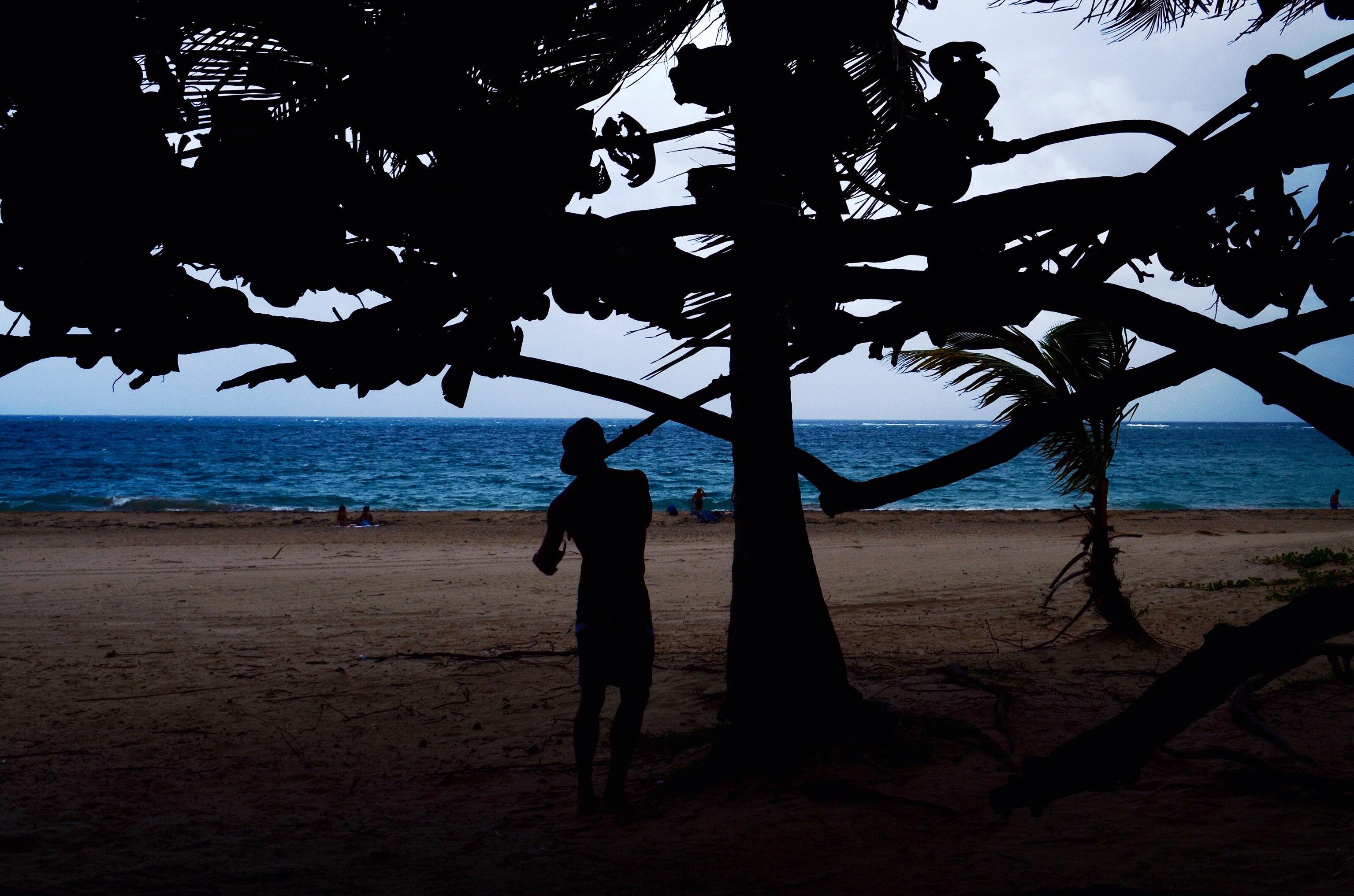 Silhouette of man beside tree near seashore photo