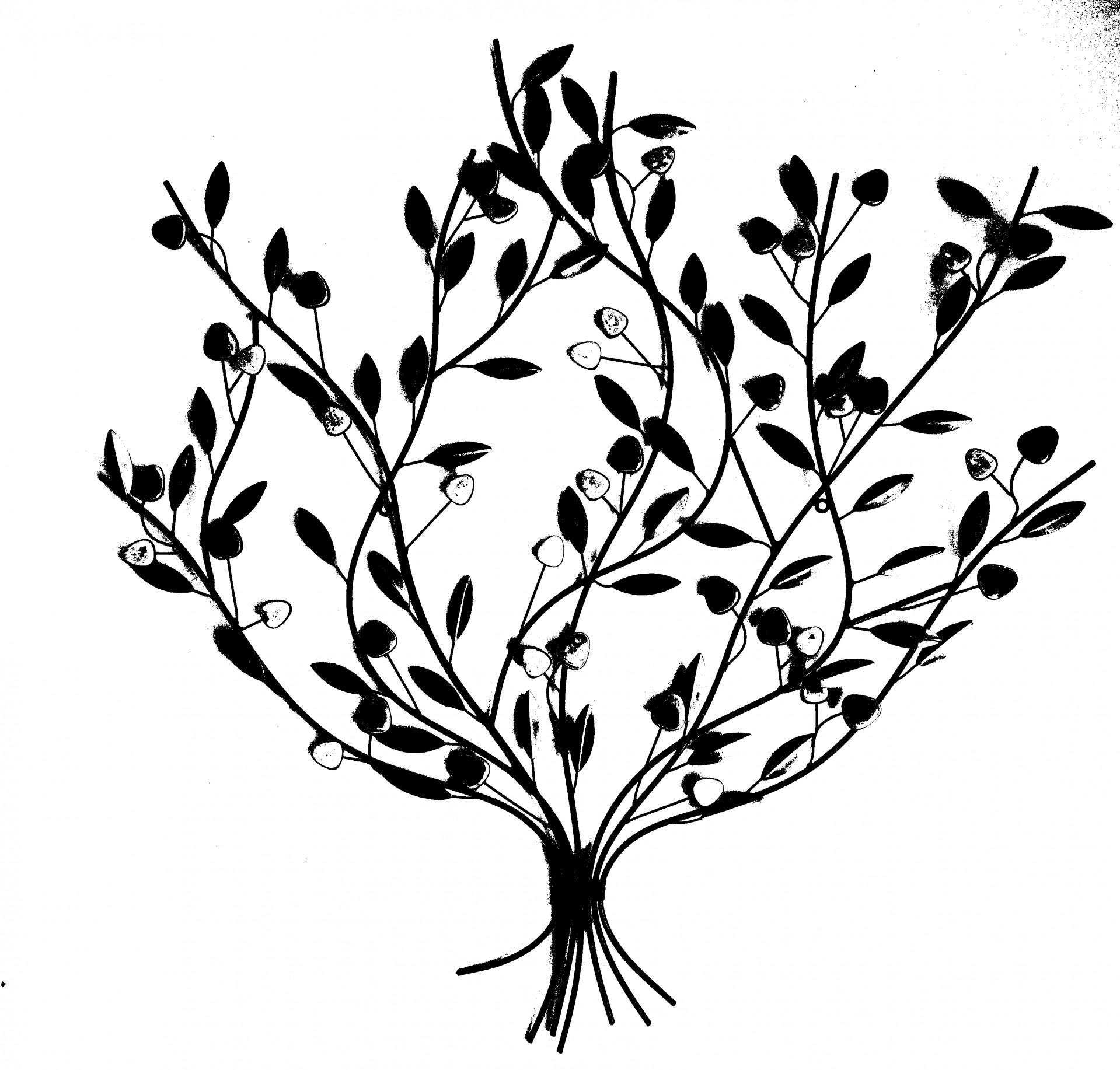 Plant Silhouette Free Stock Photo - Public Domain Pictures