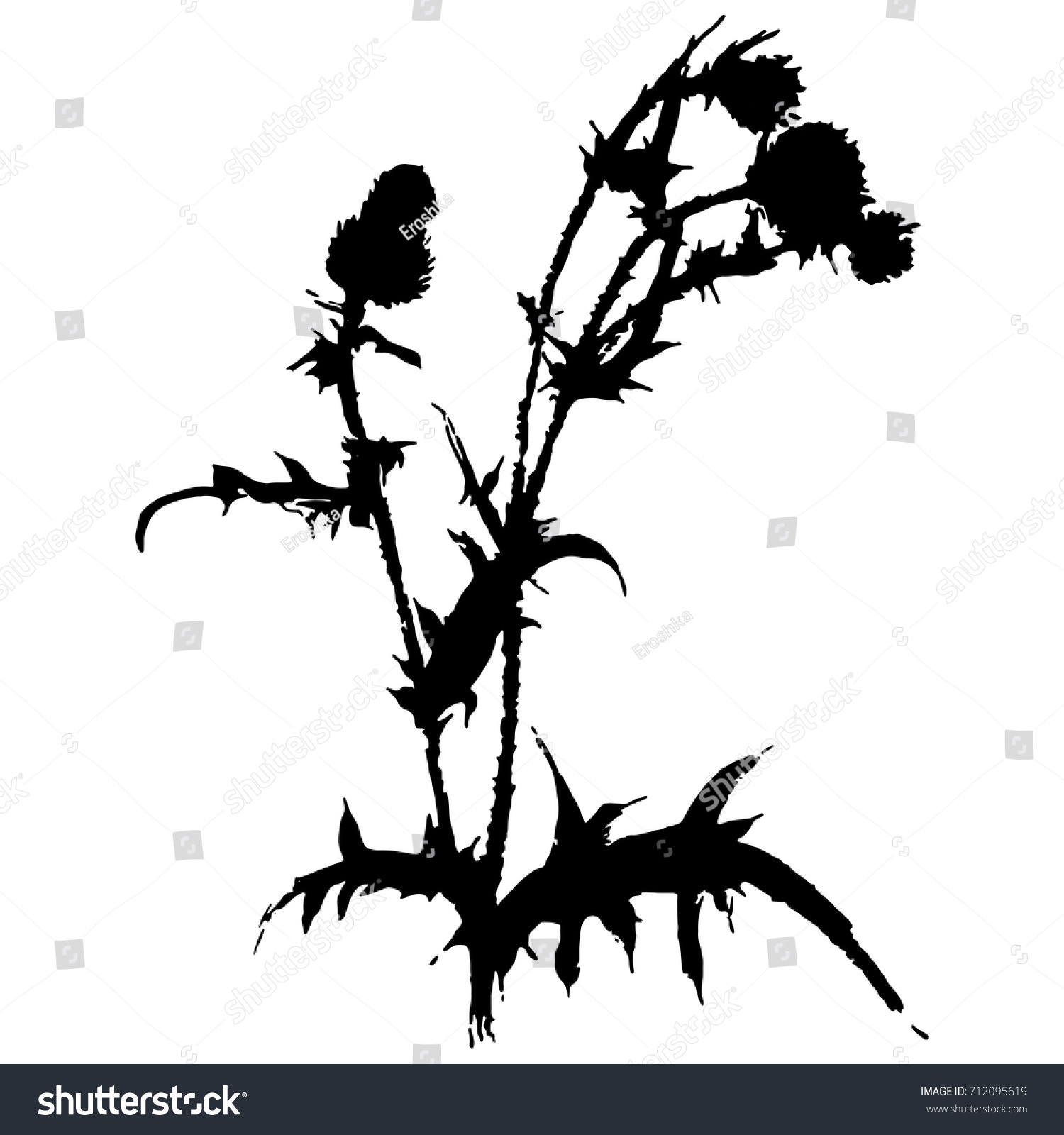 Isolated Black Silhouette Thistle Plant Wild Stock Vector 712095619 ...