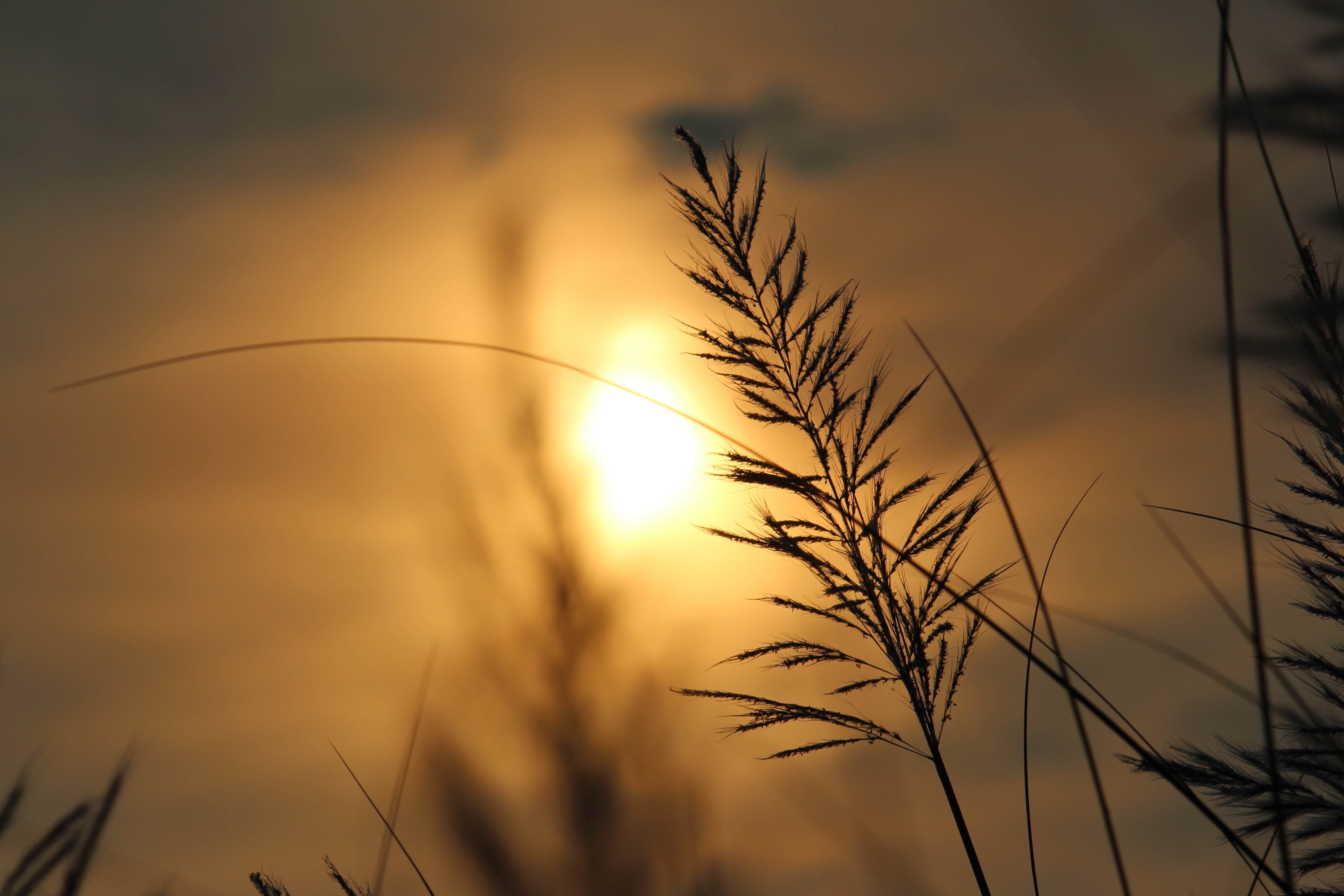 Silhouette of Plant, Afterglow, Light, Sun, Sky, HQ Photo