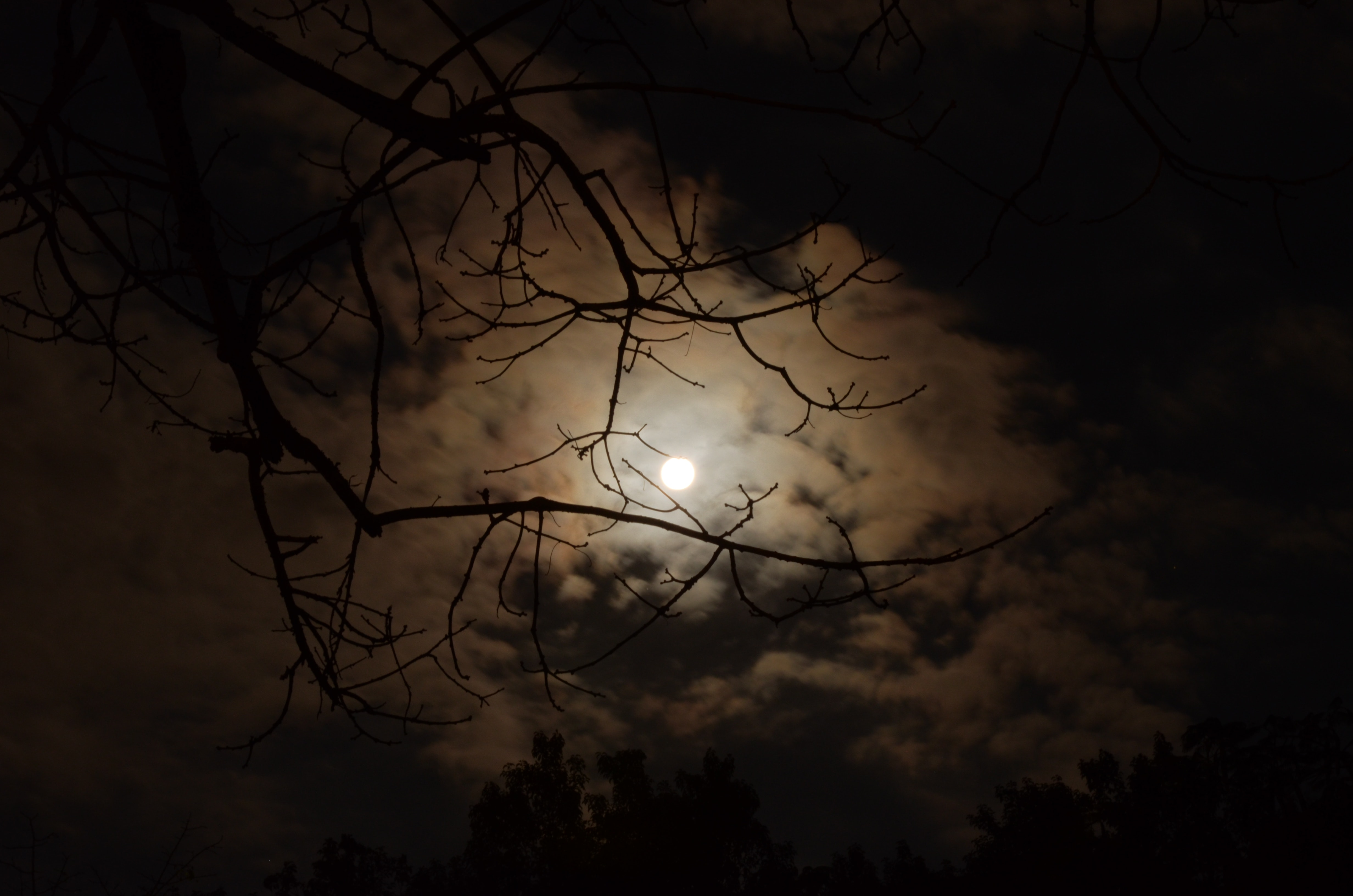 Silhouette of tree branch under white cloudy skies during nighttime photo