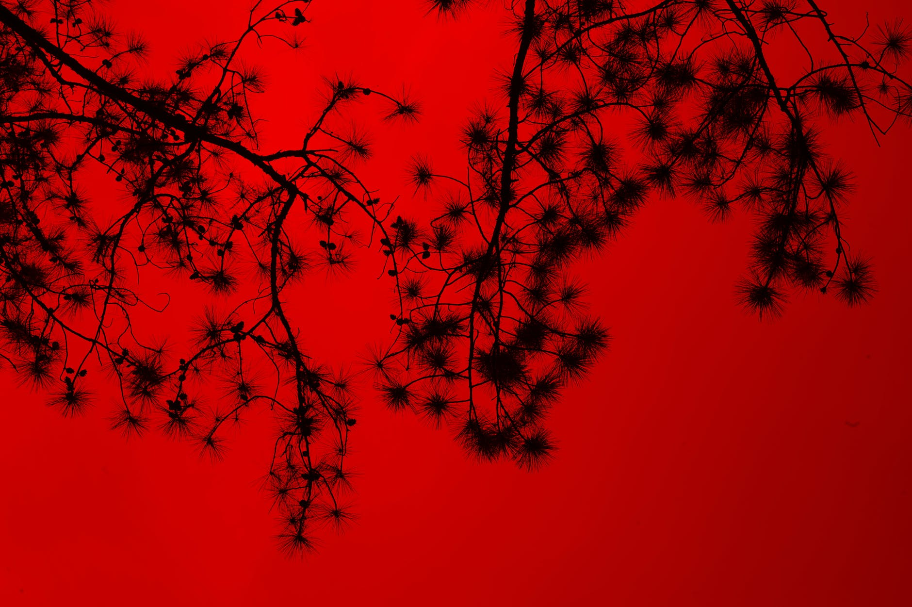 Silhouette of tree branches photo