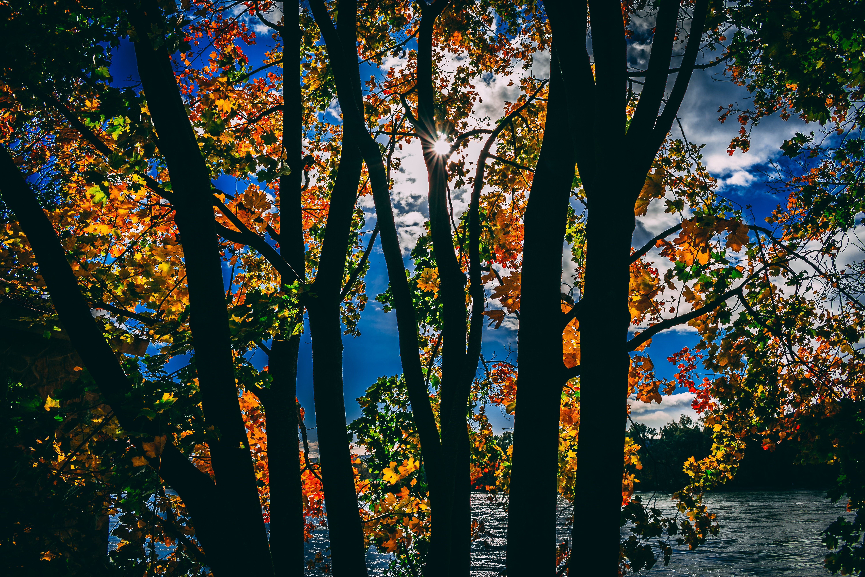 Silhouette of Trees, Autumn, Growth, Sun, Silhouette, HQ Photo