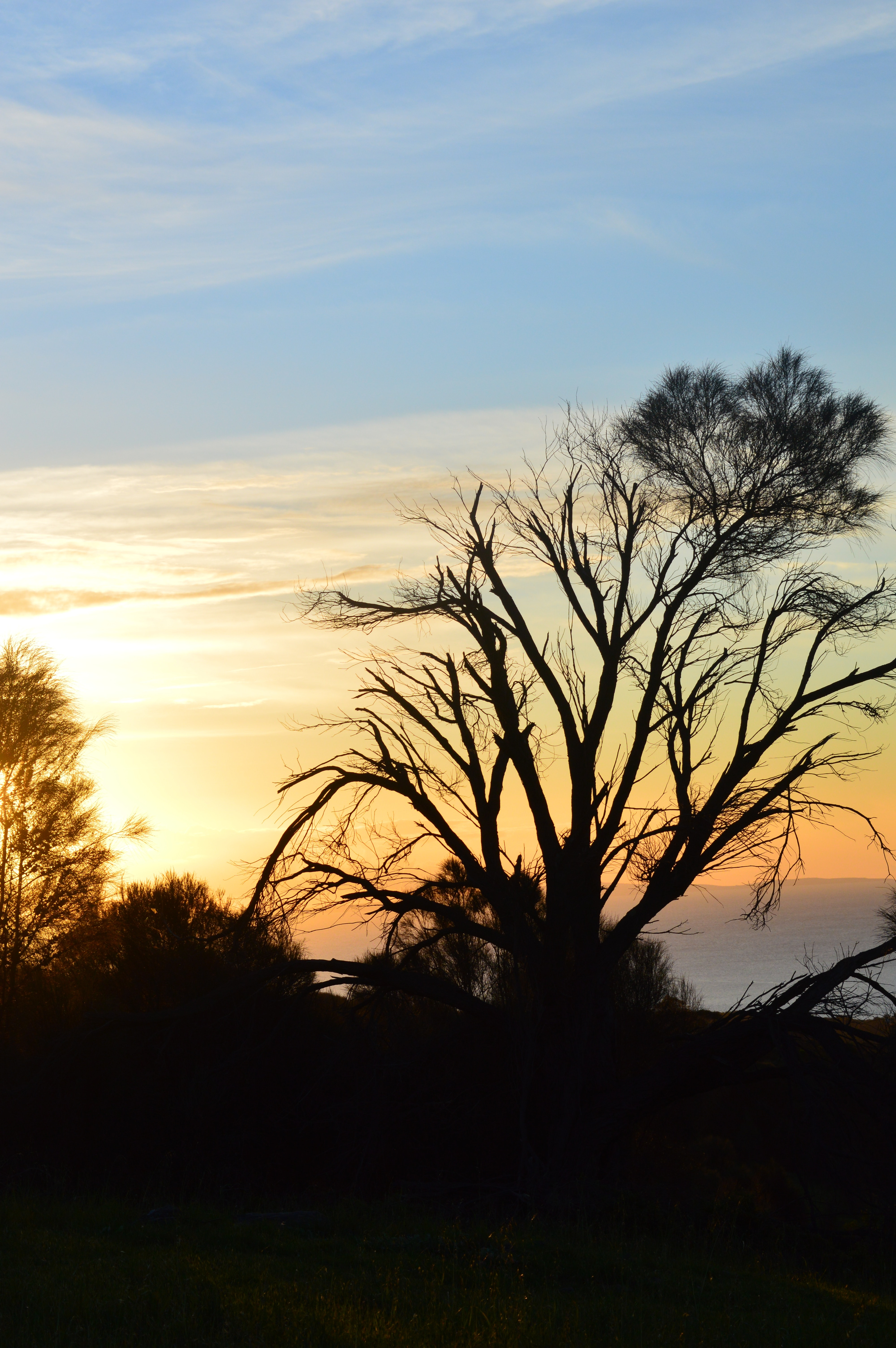 Silhouette of trees photo
