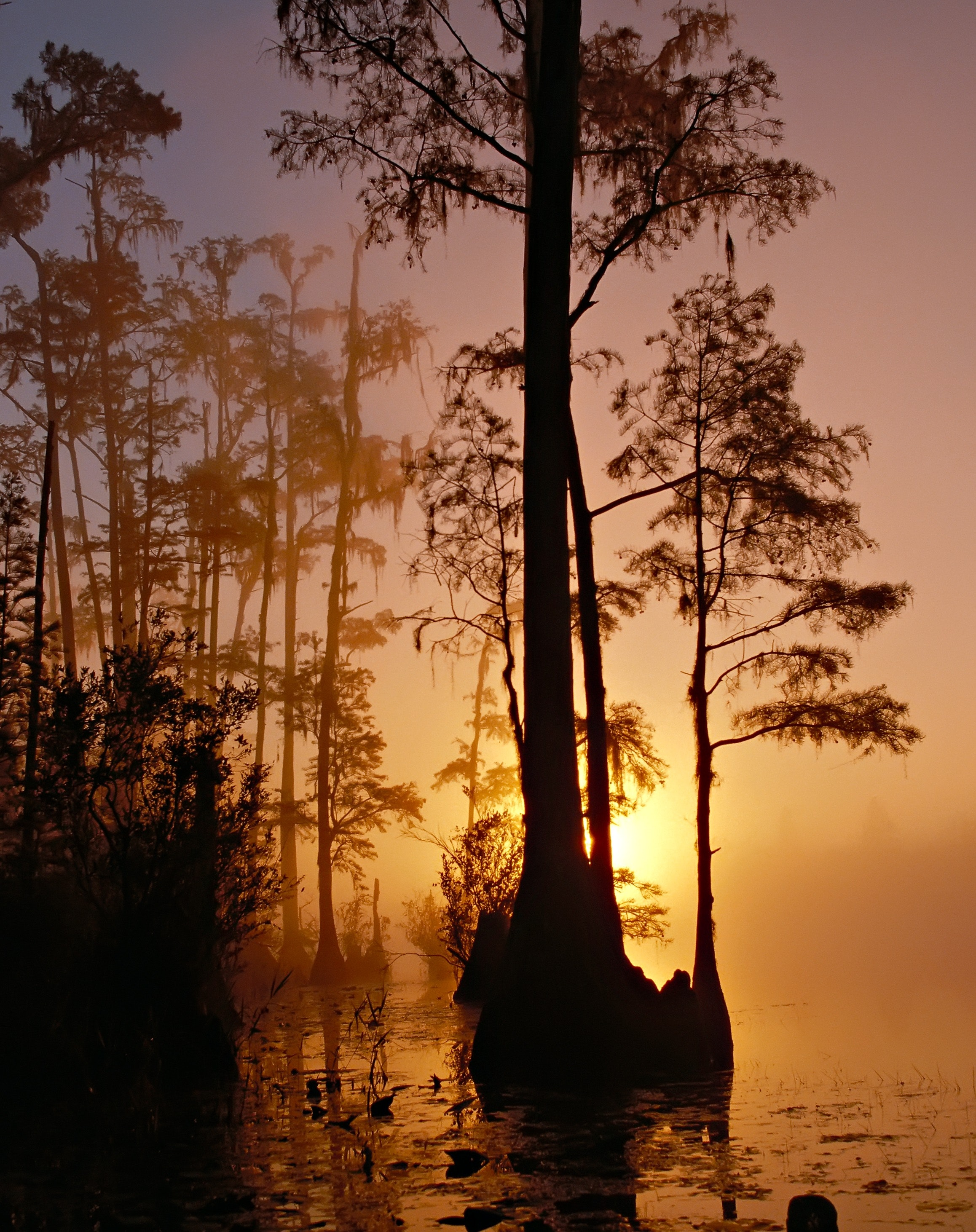 Silhouette of Trees Beside Body of Water during Sunset, Mist, Silhouette, Sunrise, Sunset, HQ Photo