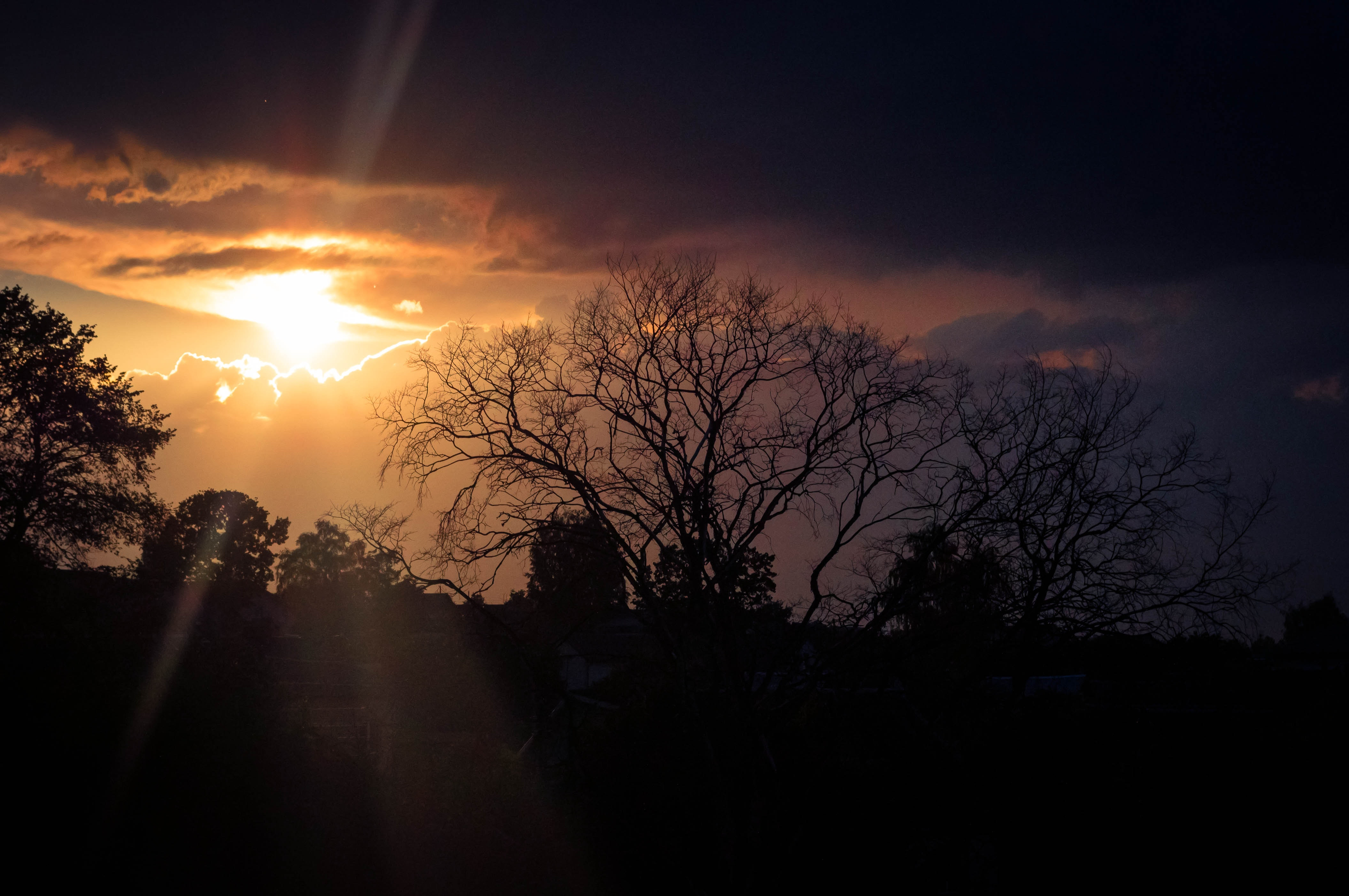 Silhouette of Trees during Golden Hour, Backlit, Light, Trees, Sunset, HQ Photo
