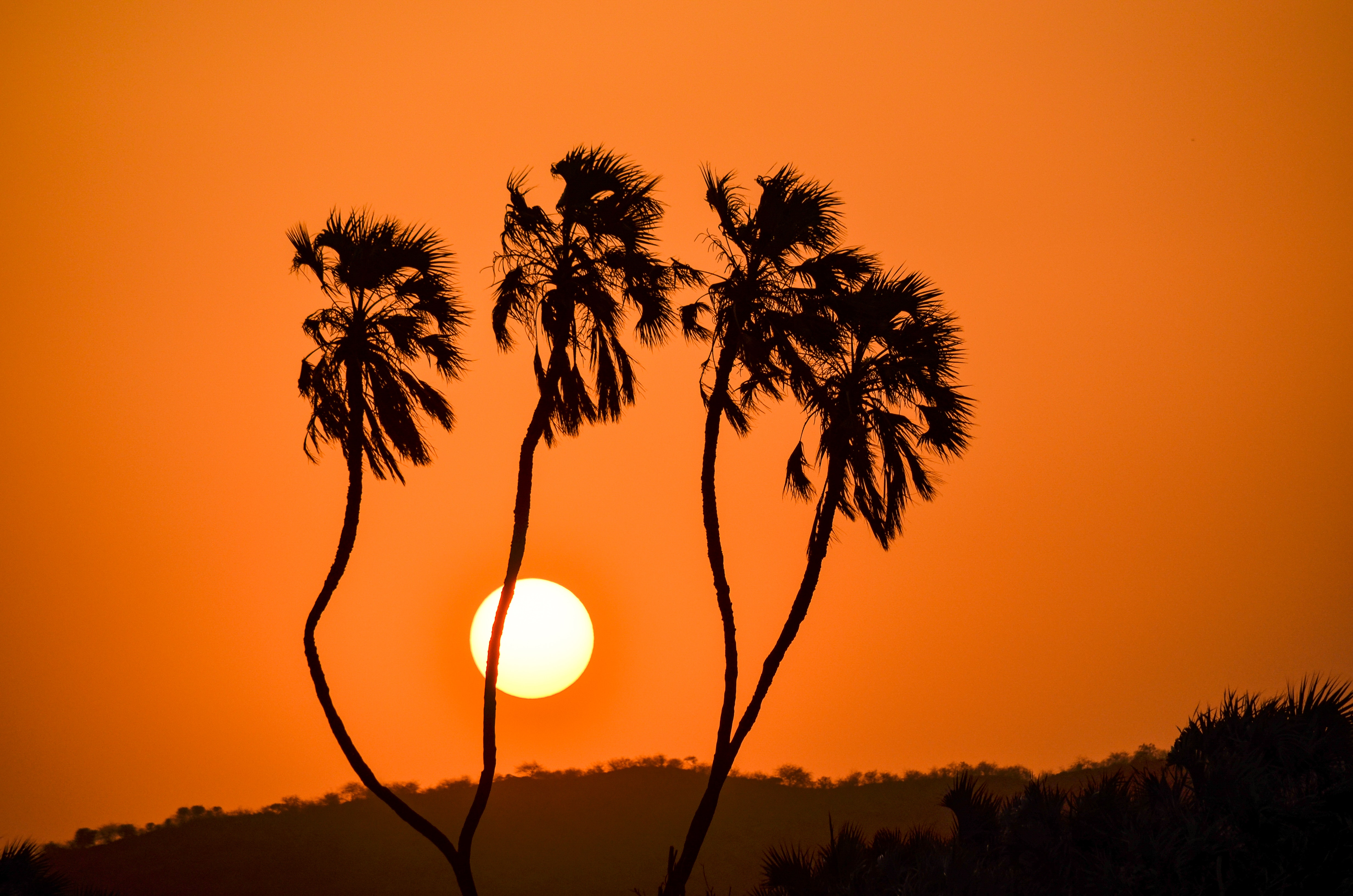 Silhouette of trees during golden hour photo