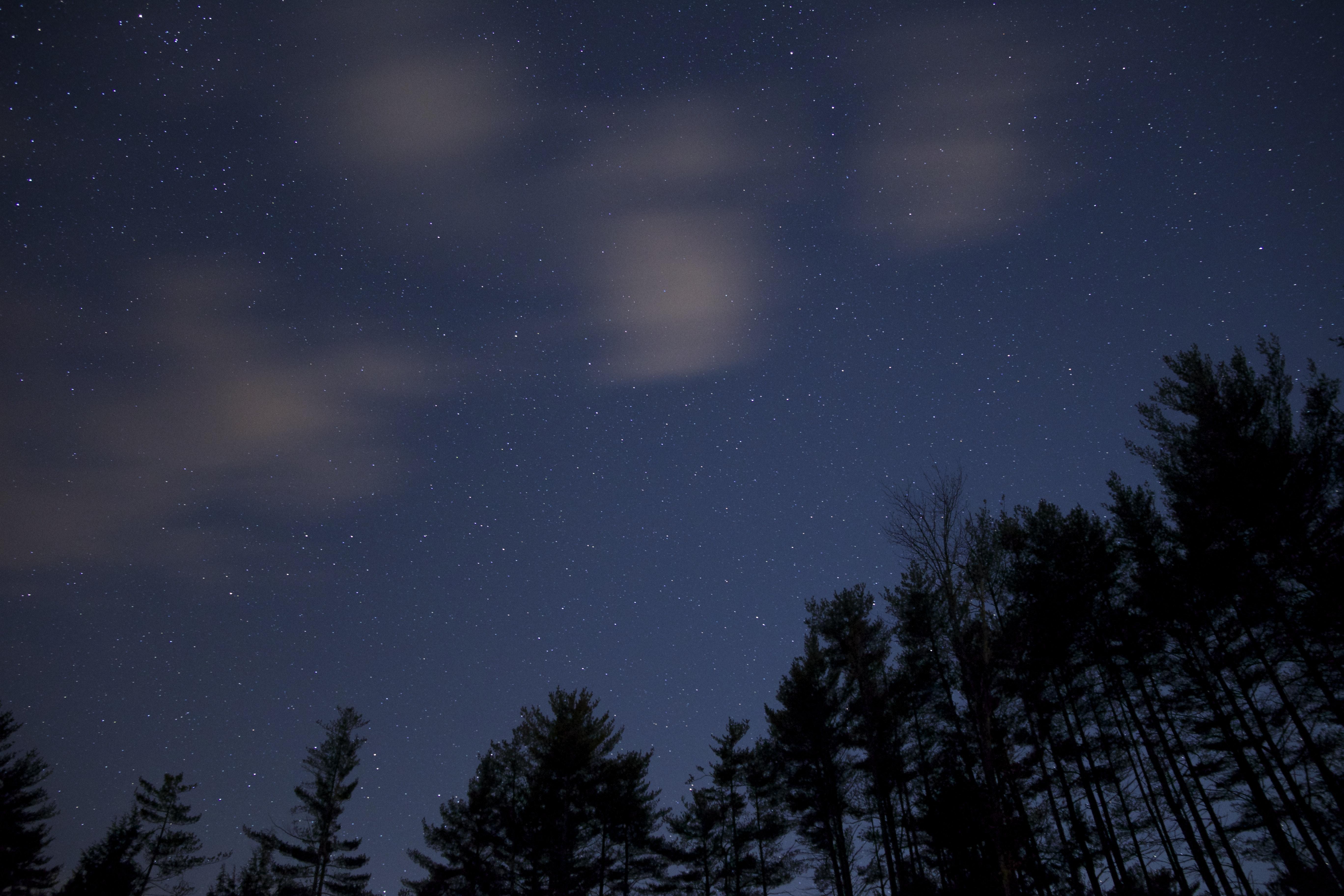 Silhouette of Trees during Night Time, Dark, Night, Sky, Stars, HQ Photo